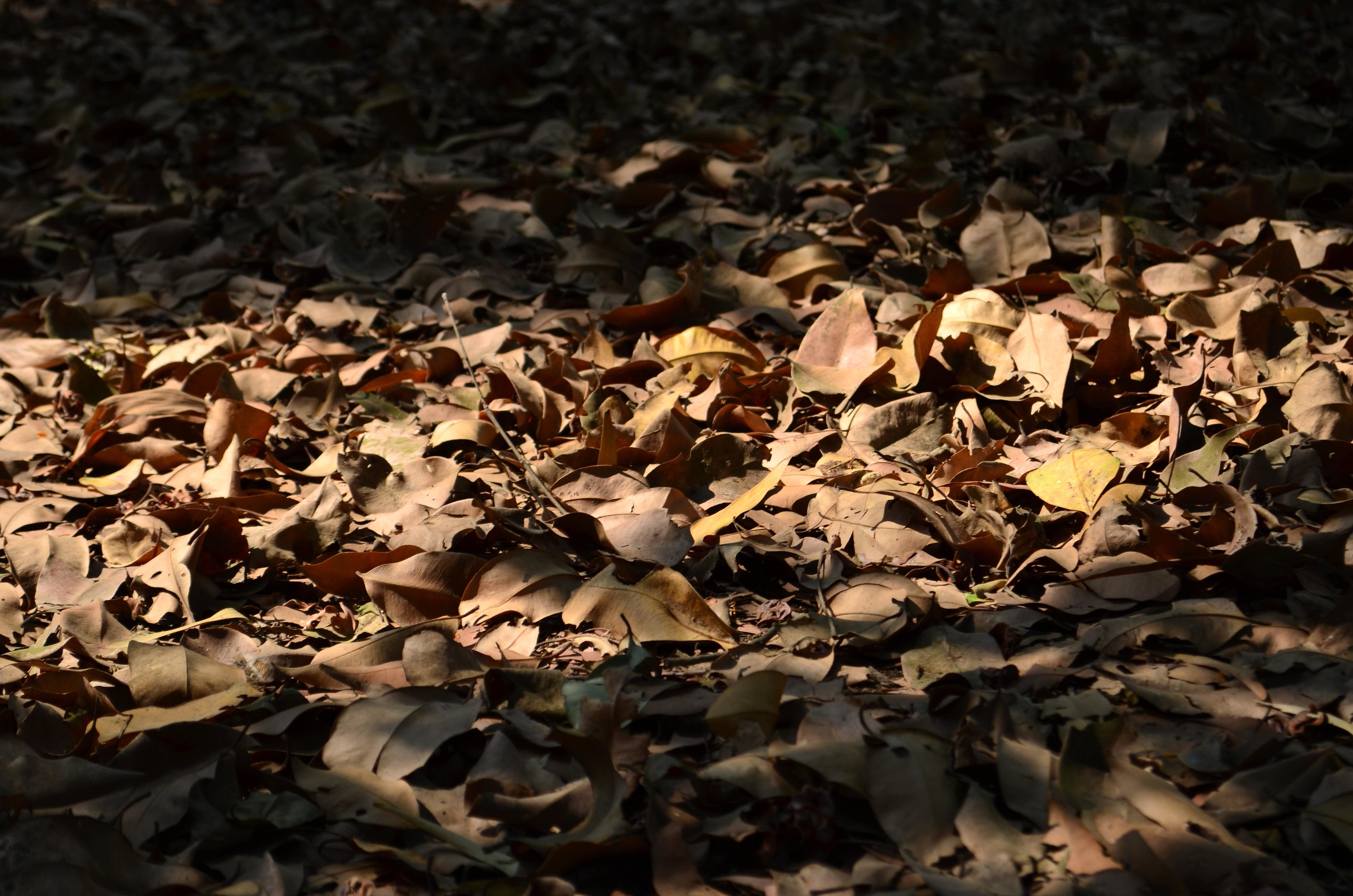 Free picture dark sahdow leaves ground forest