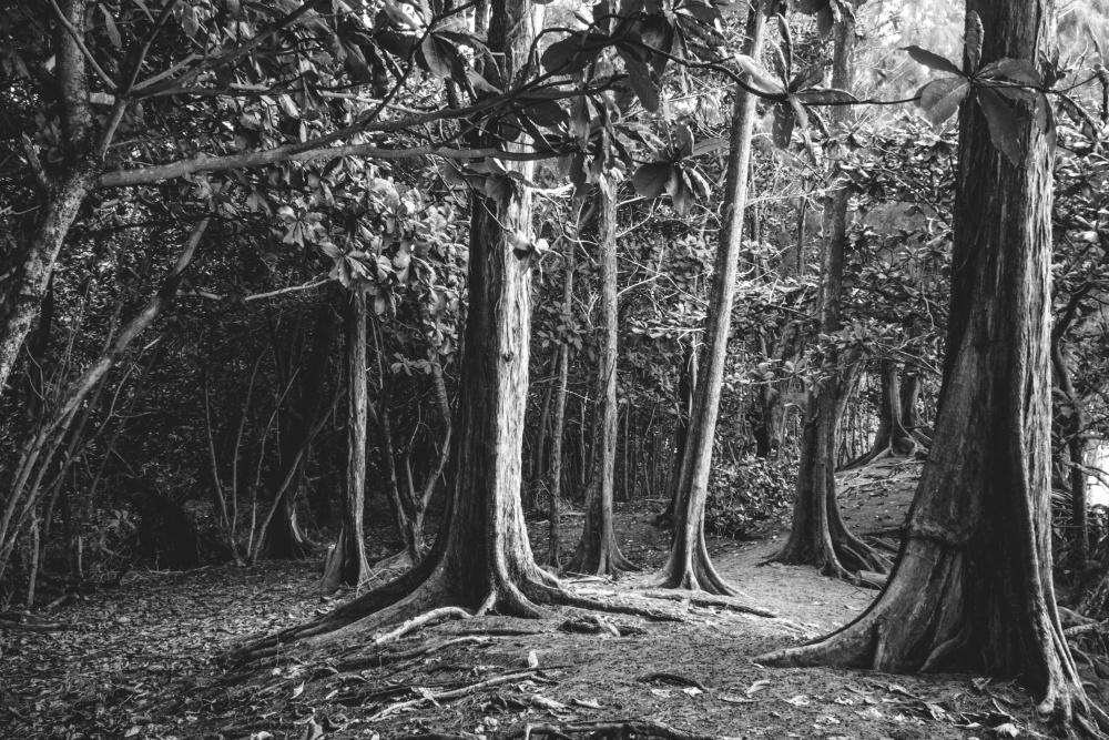 Gravity Falls Wallpaper Forest Image Libre For 234 T Sombre Jungle Bois Arbre Nature