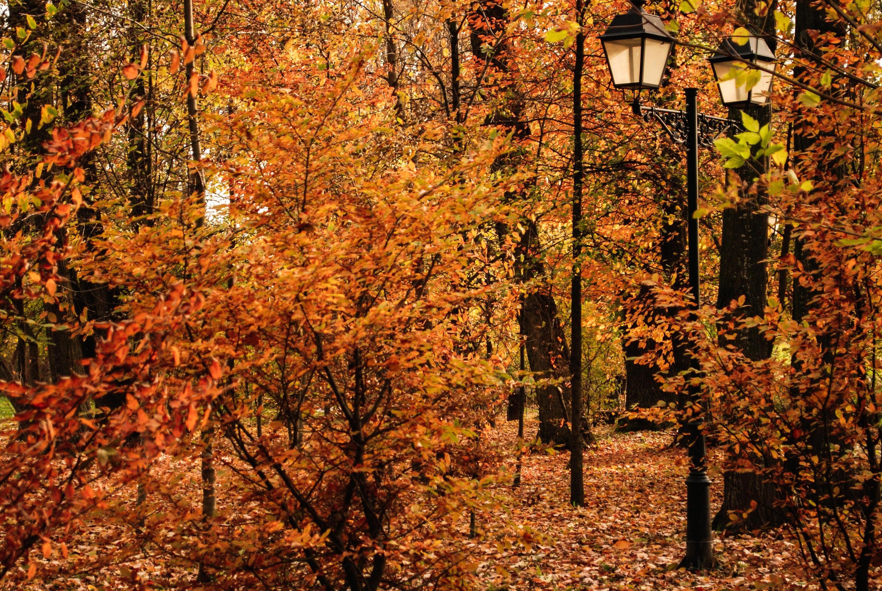 Fall Foliage Computer Wallpaper Image Libre Feuille Bois Arbre Nature Paysage