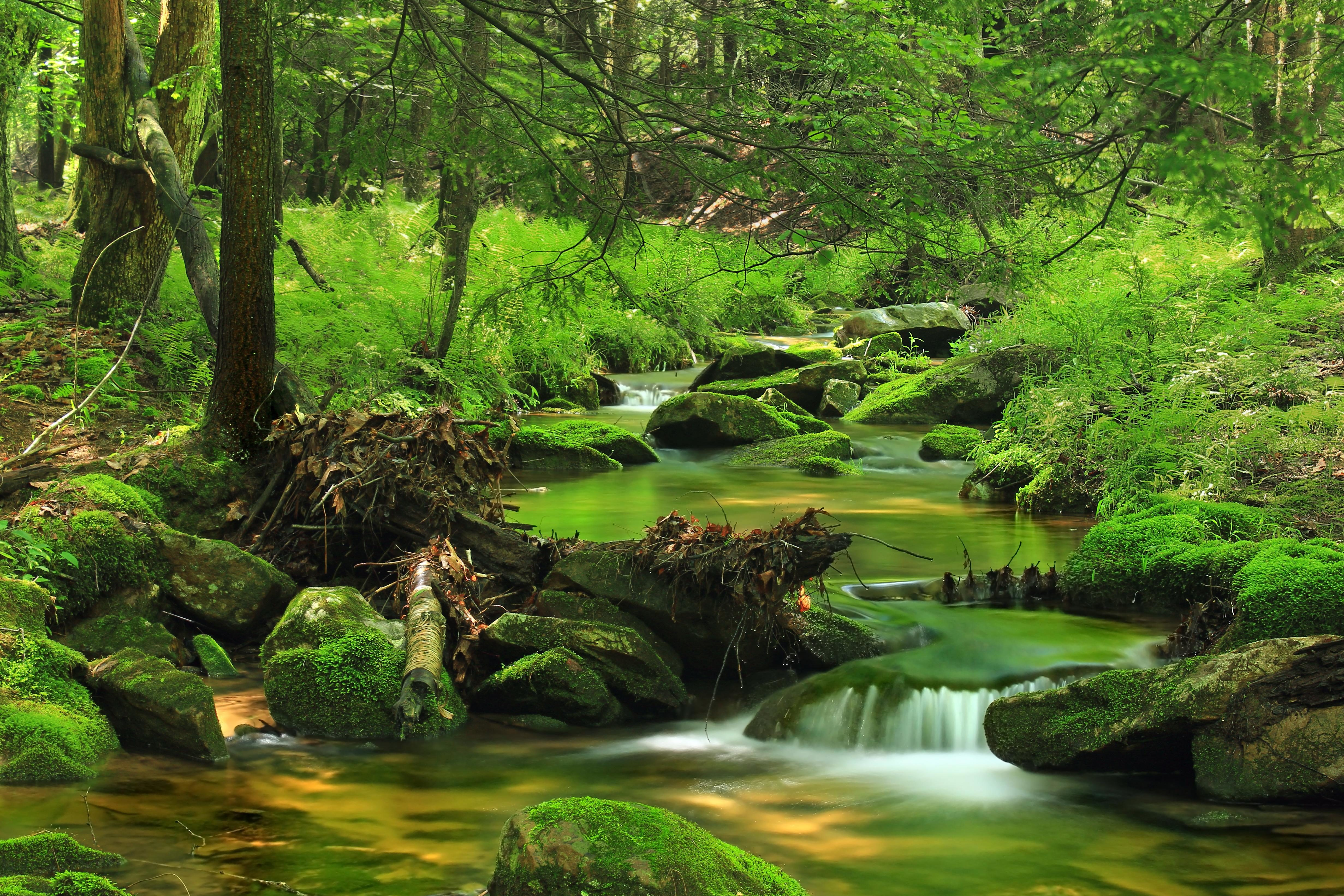 Free picture wood nature water landscape leaf tree moss waterfall forest