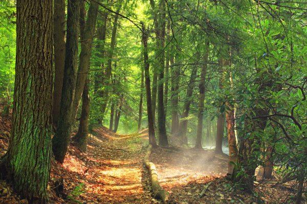 free wood tree landscape