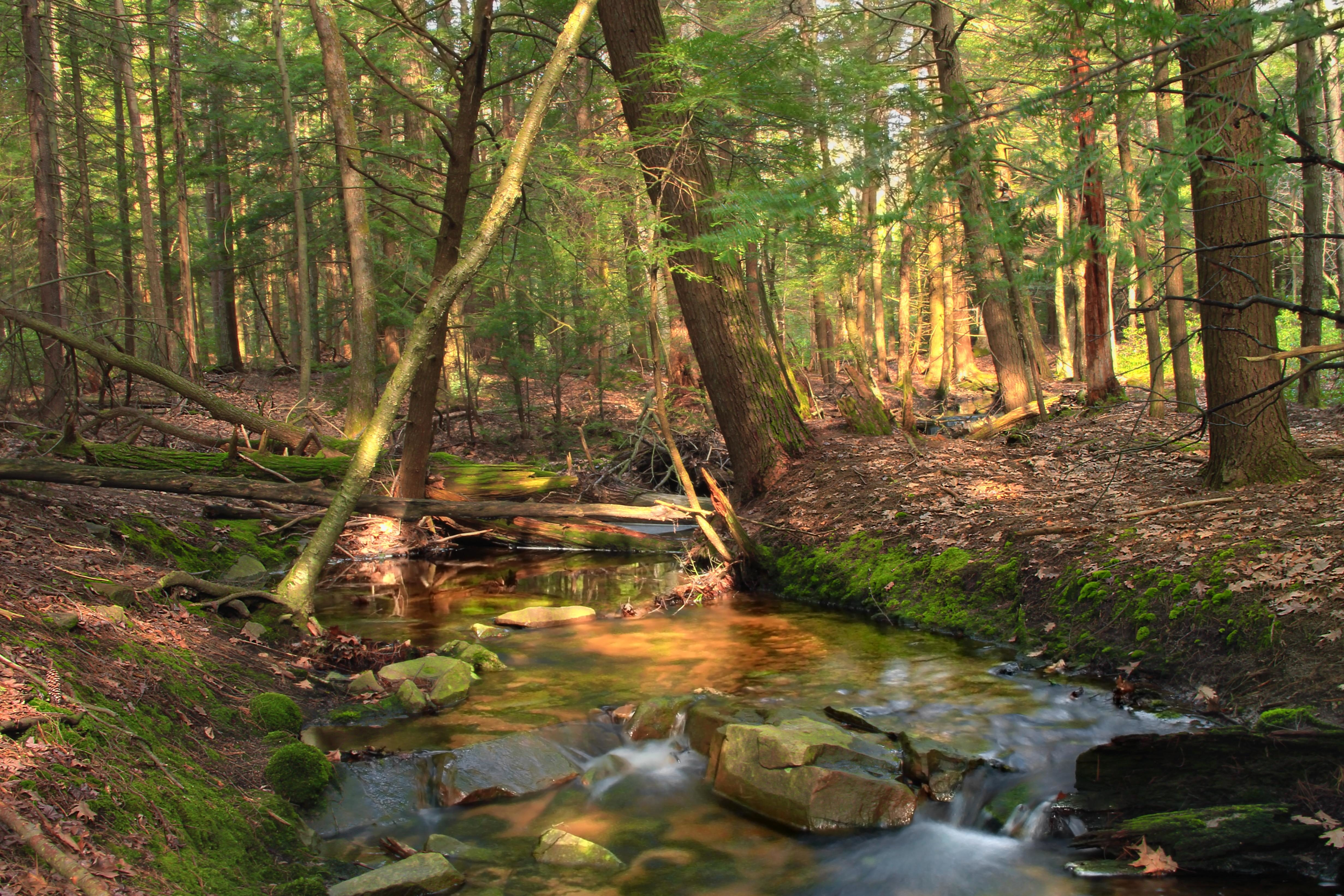 Free picture wood water landscape nature leaf river