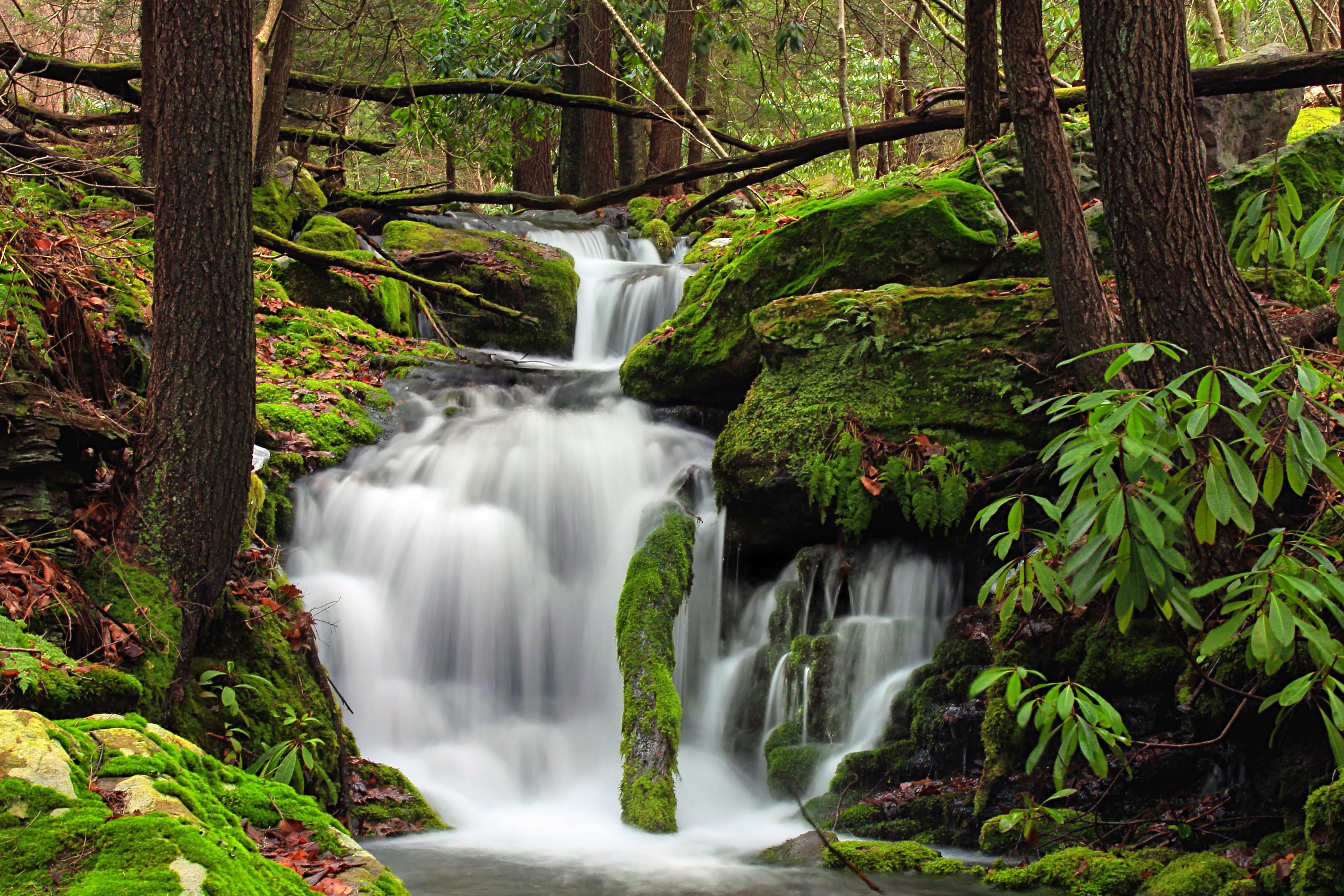 Imagen gratis madera cascada naturaleza agua hoja