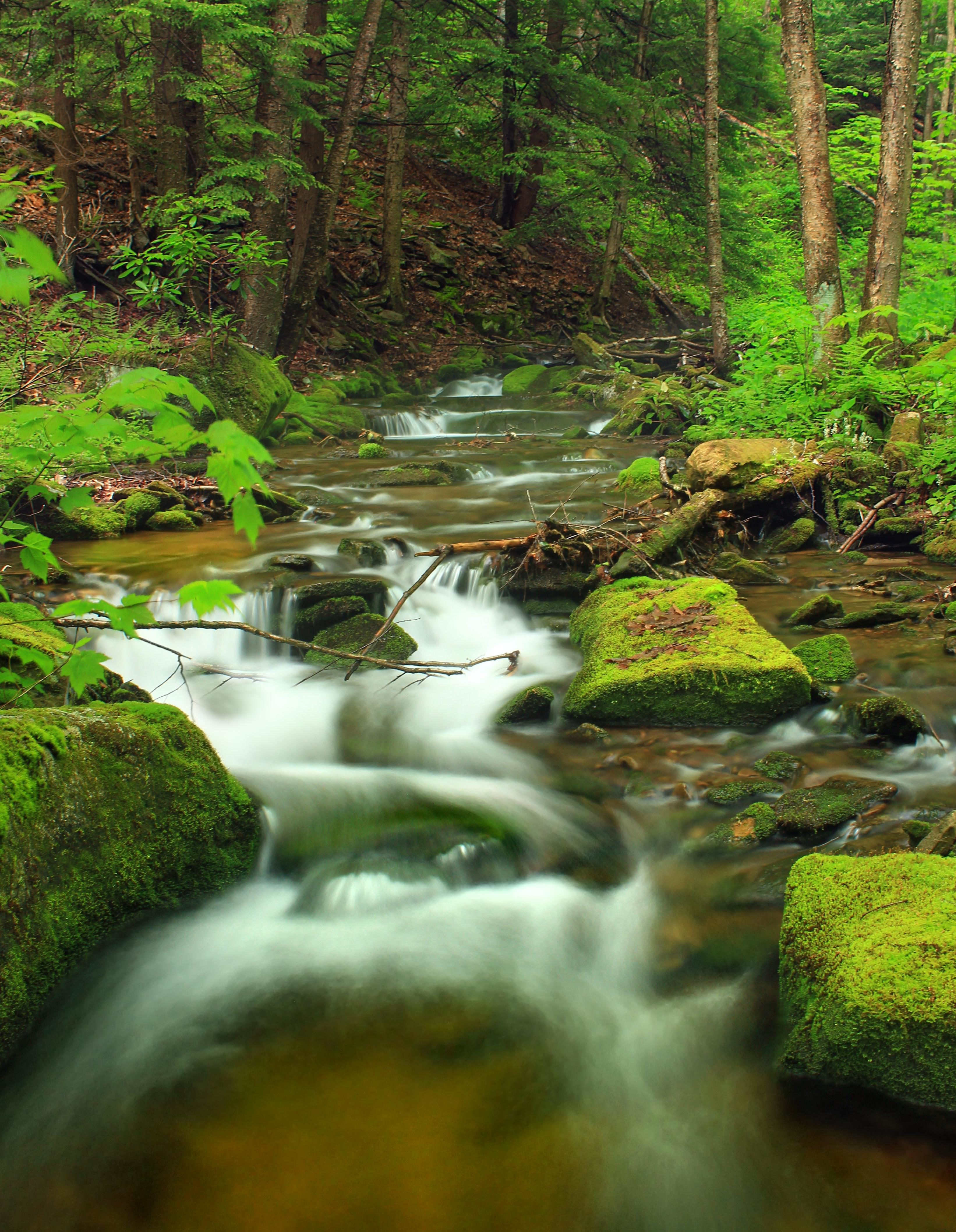 Free picture water waterfall stream wood nature