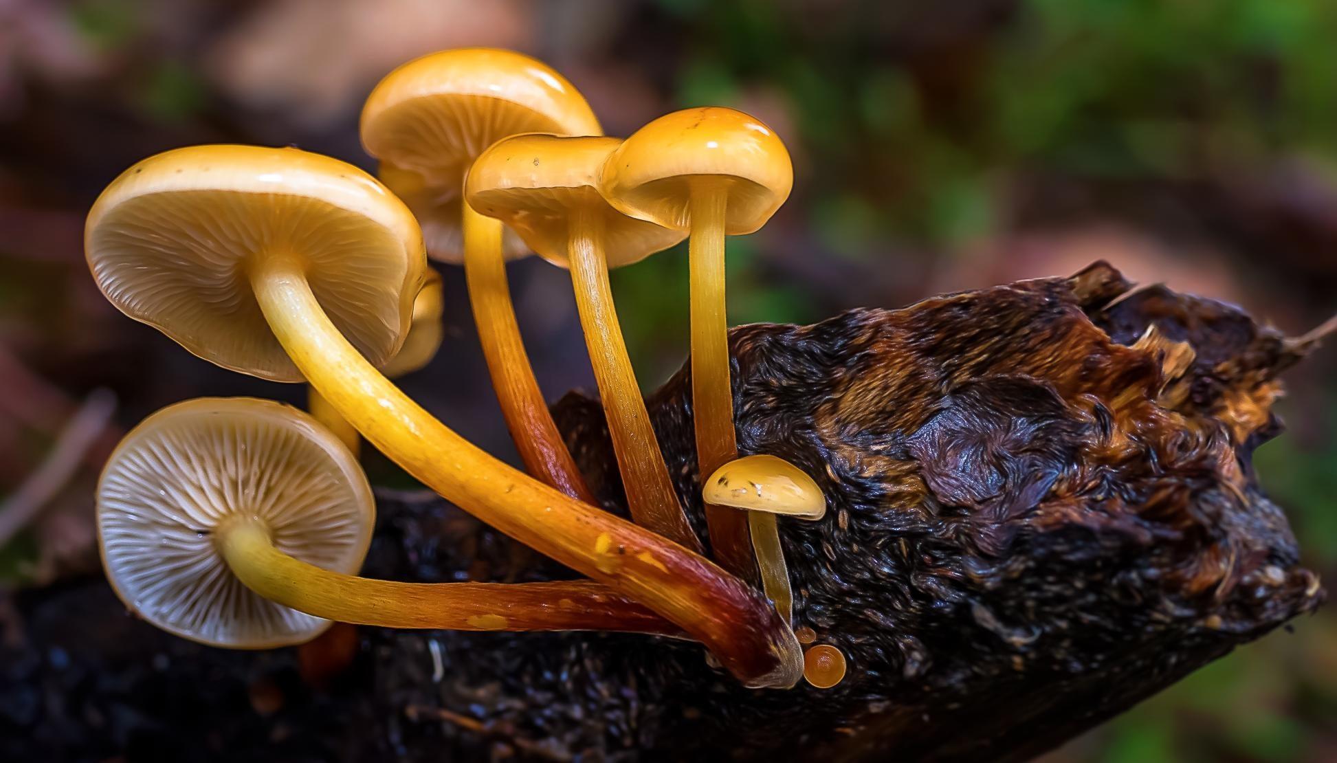 Free Picture Mushroom Fungus Nature Macro Vegetable