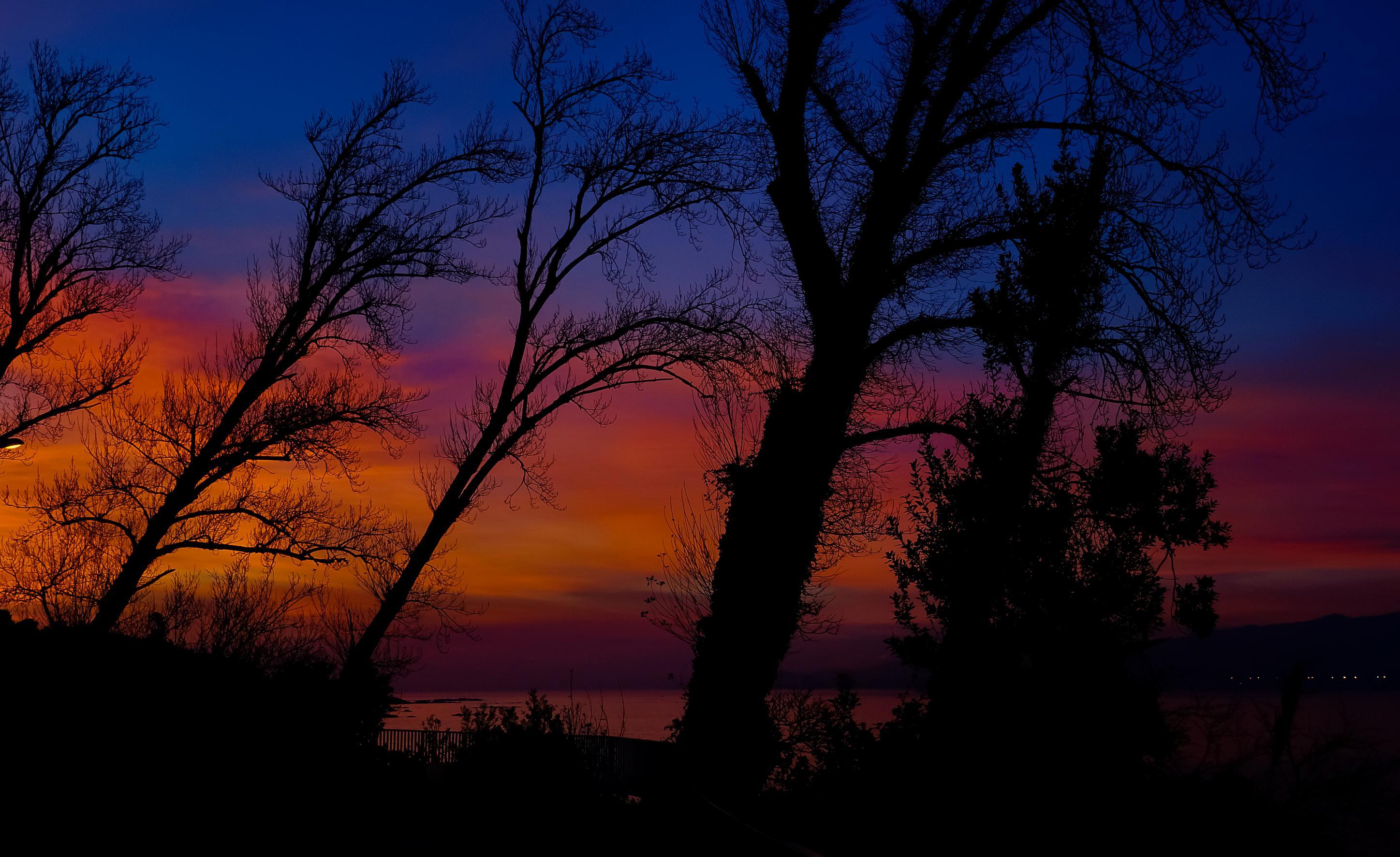 Free picture dawn tree landscape sunset backlit sun