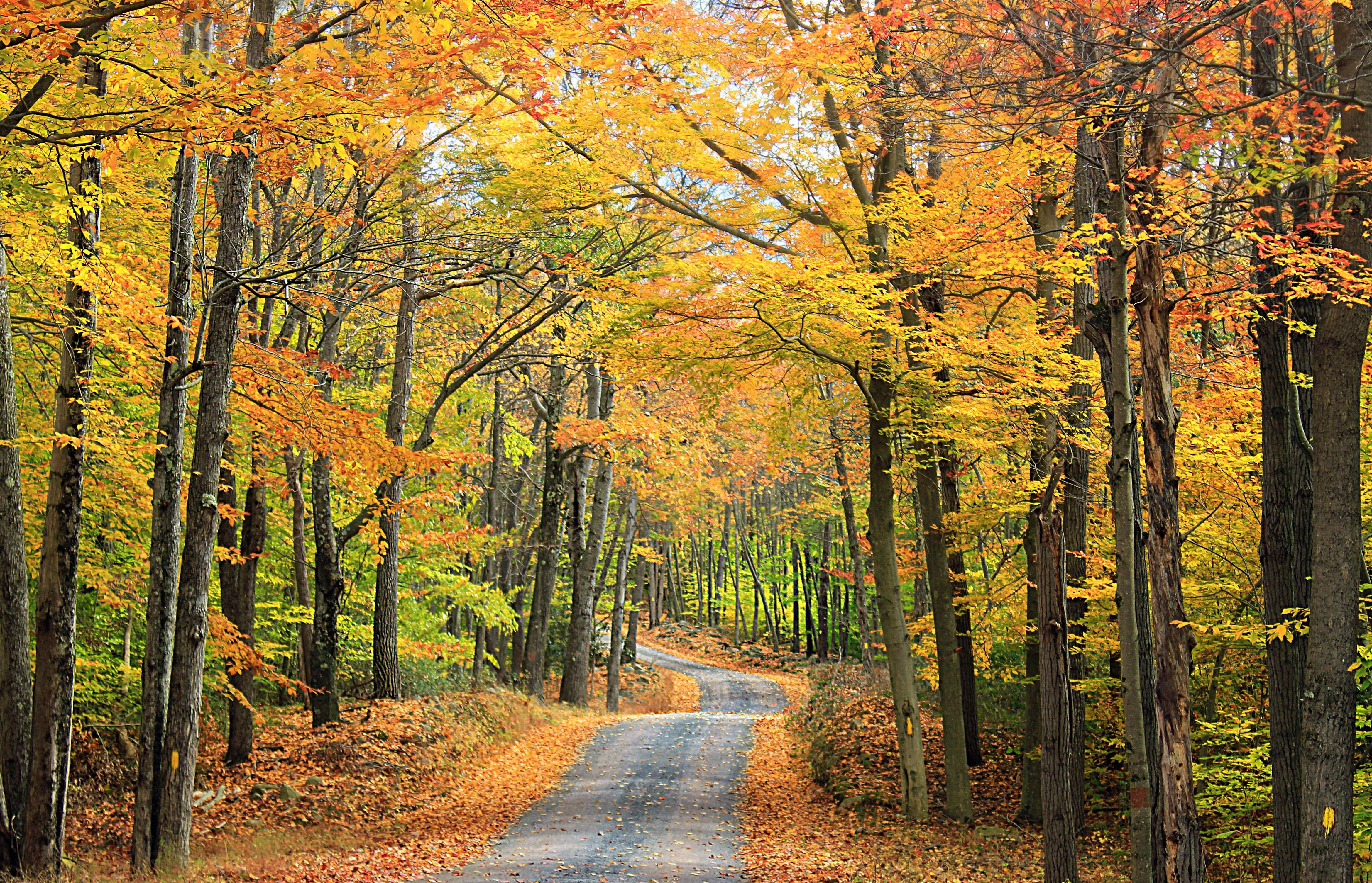 Nove Ber Fall Wallpaper For Computer Free Picture Leaf Wood Tree Landscape Nature Road