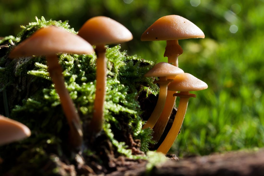 Free picture mushroom fungus wood nature moss spore