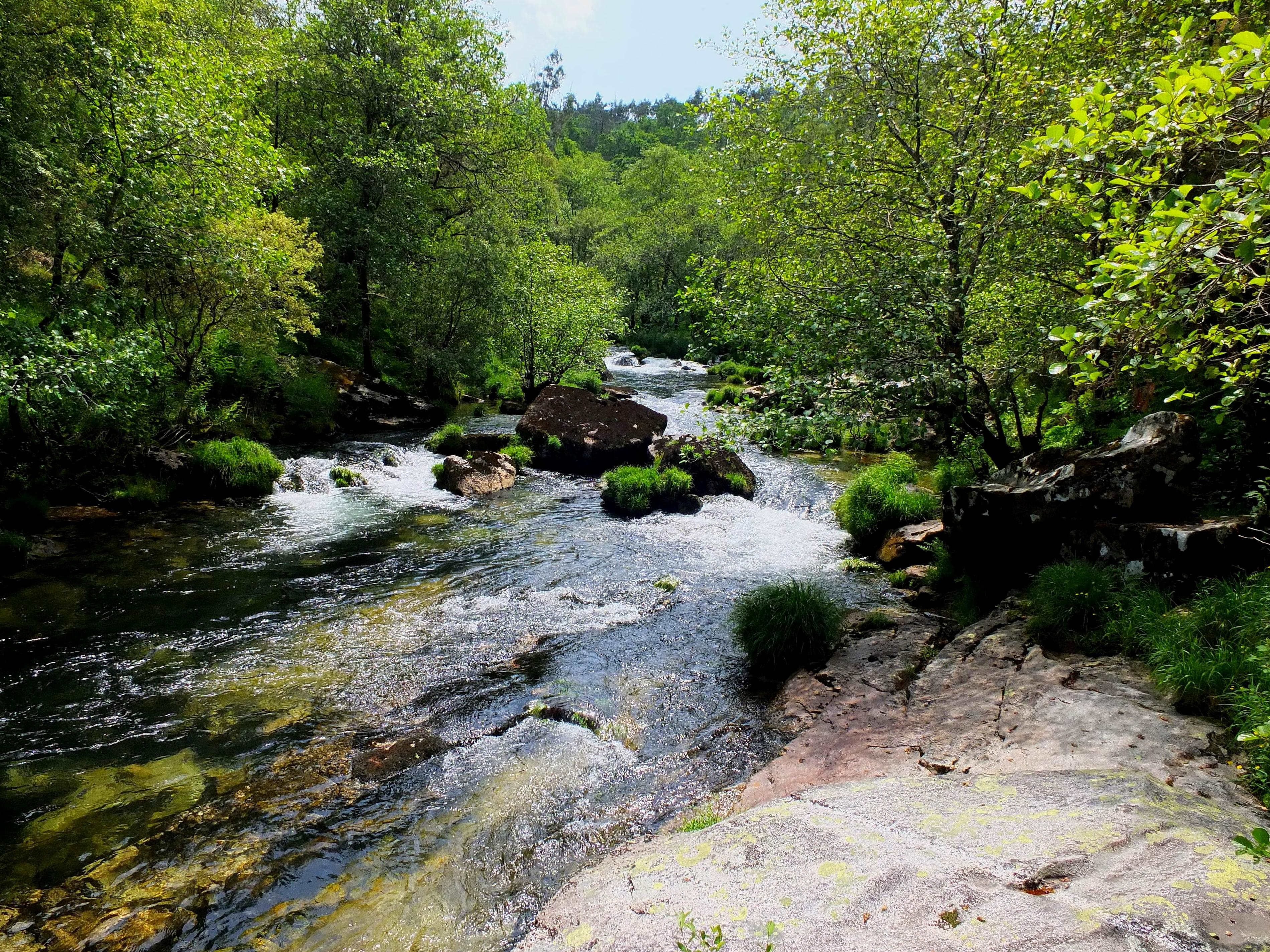 Free picture water nature wood river landscape