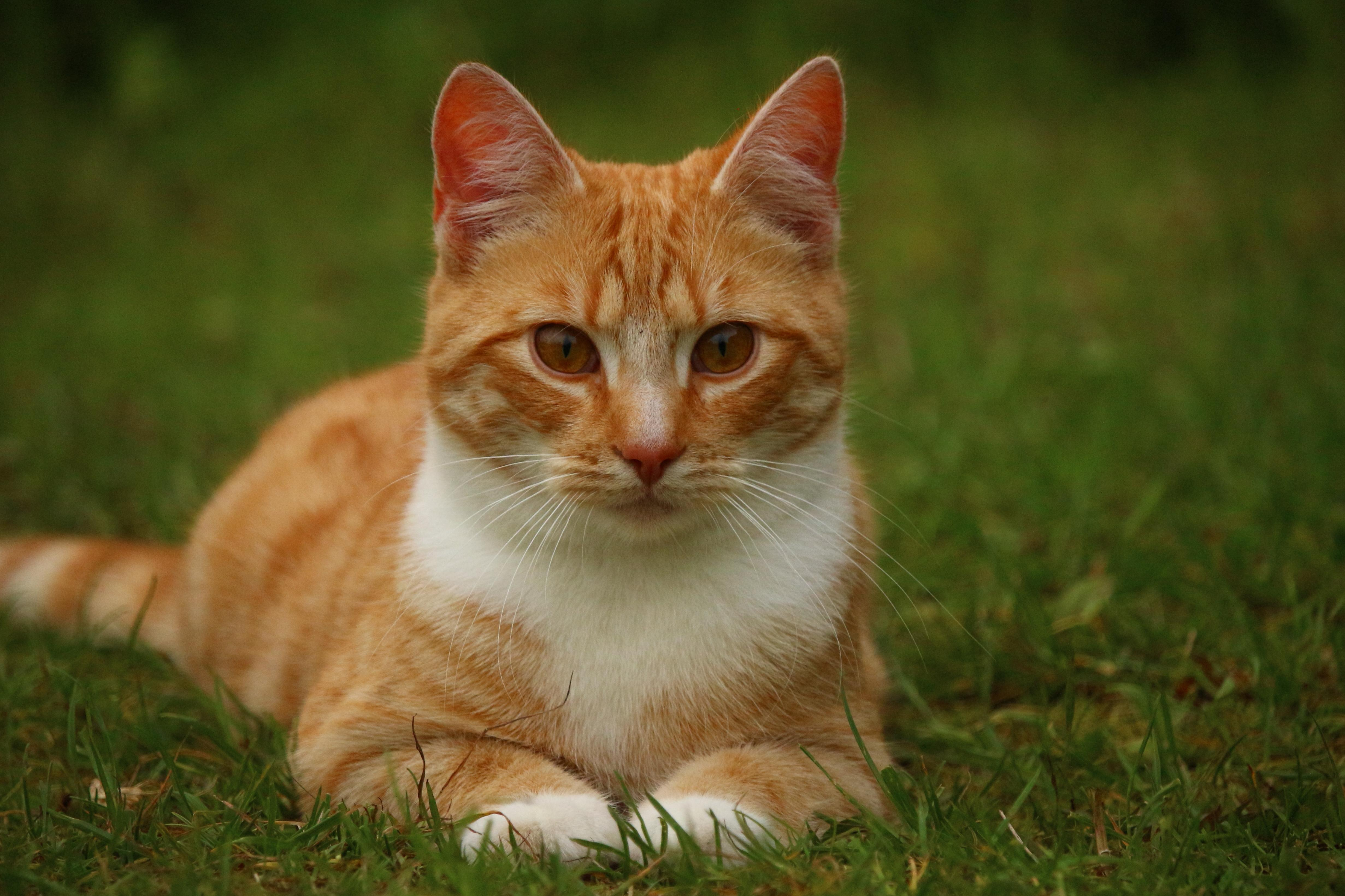 Free picture cute animal cat nature pet young