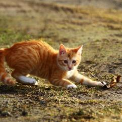 Cats In The Kitchen Free Standing Cupboards Picture: Animal, Cute, Nature, Cat, Kitten, Grass ...