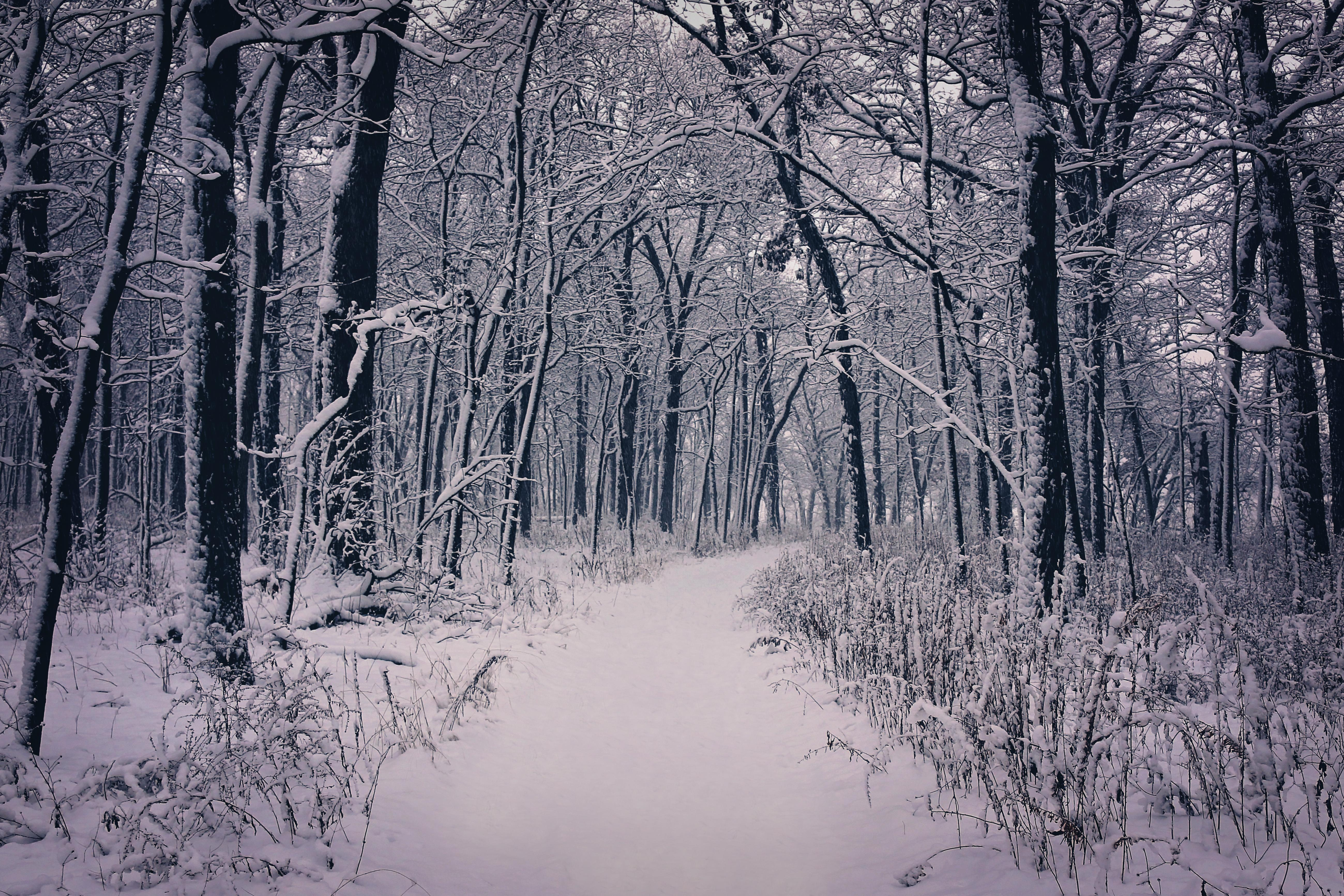 Fall Background Wallpaper Free Picture Winter Snow Wood Tree Cold Frost
