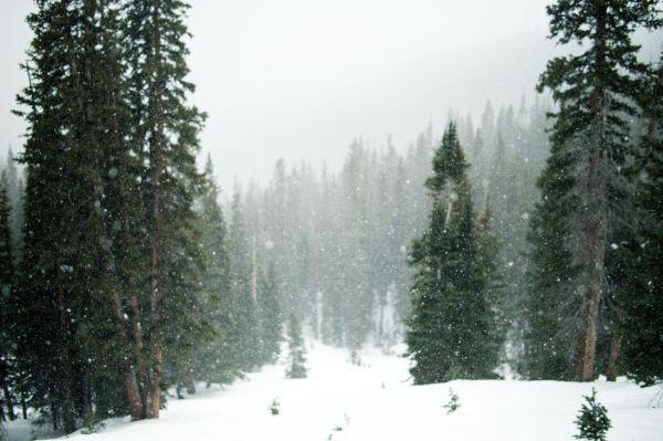 free snow winter wood