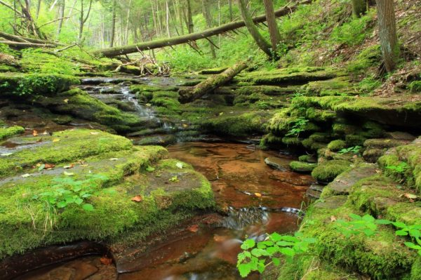 free nature forest river