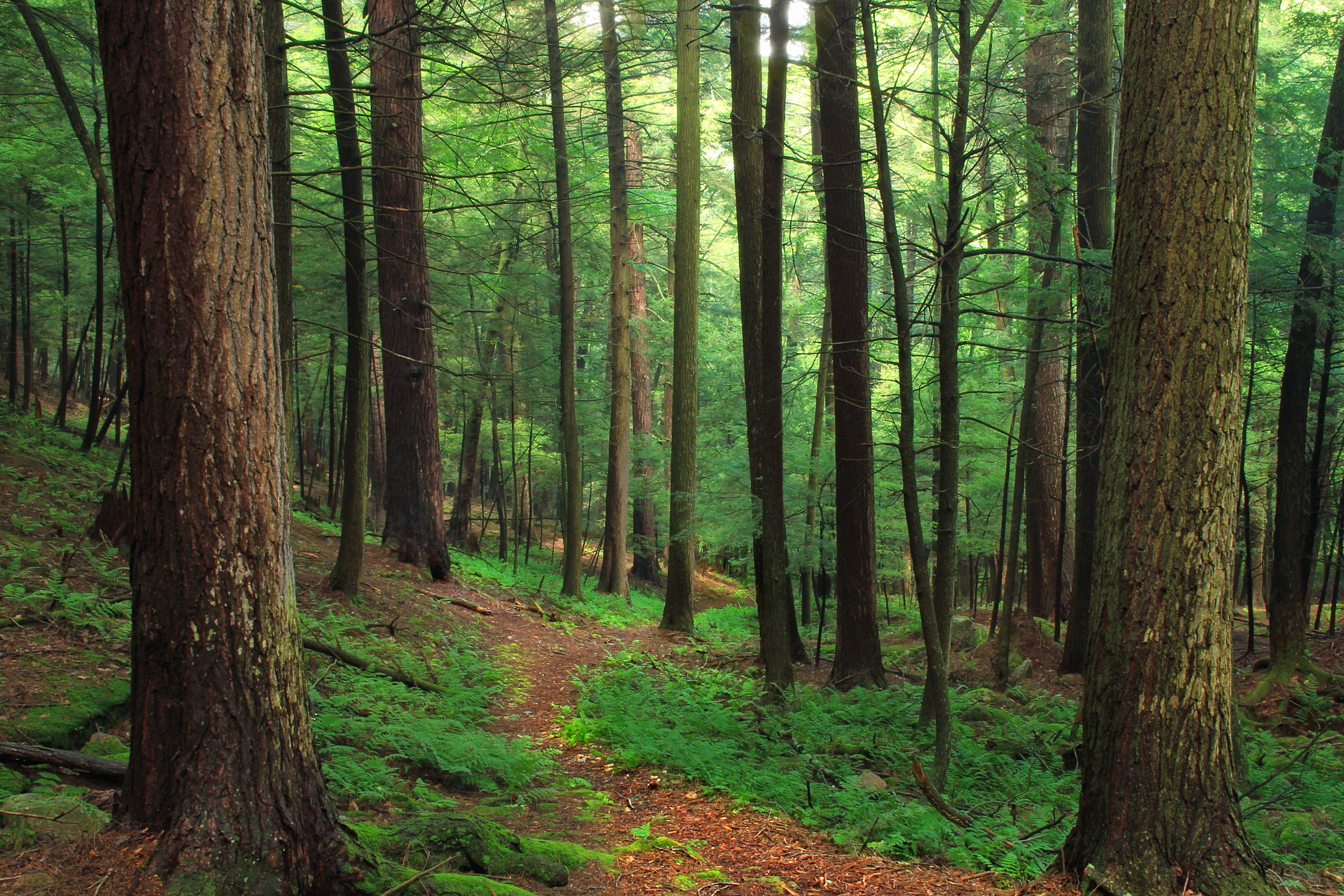 Image libre bois arbre paysage fort cologie
