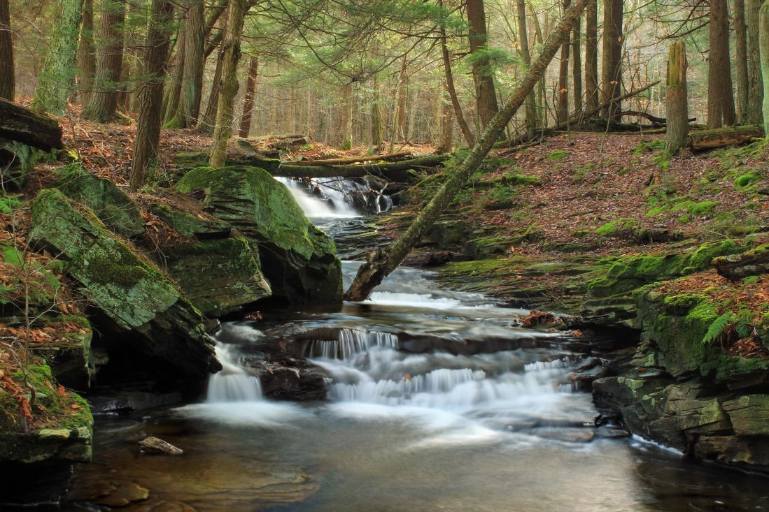 Free picture water waterfall forest moss wood nature