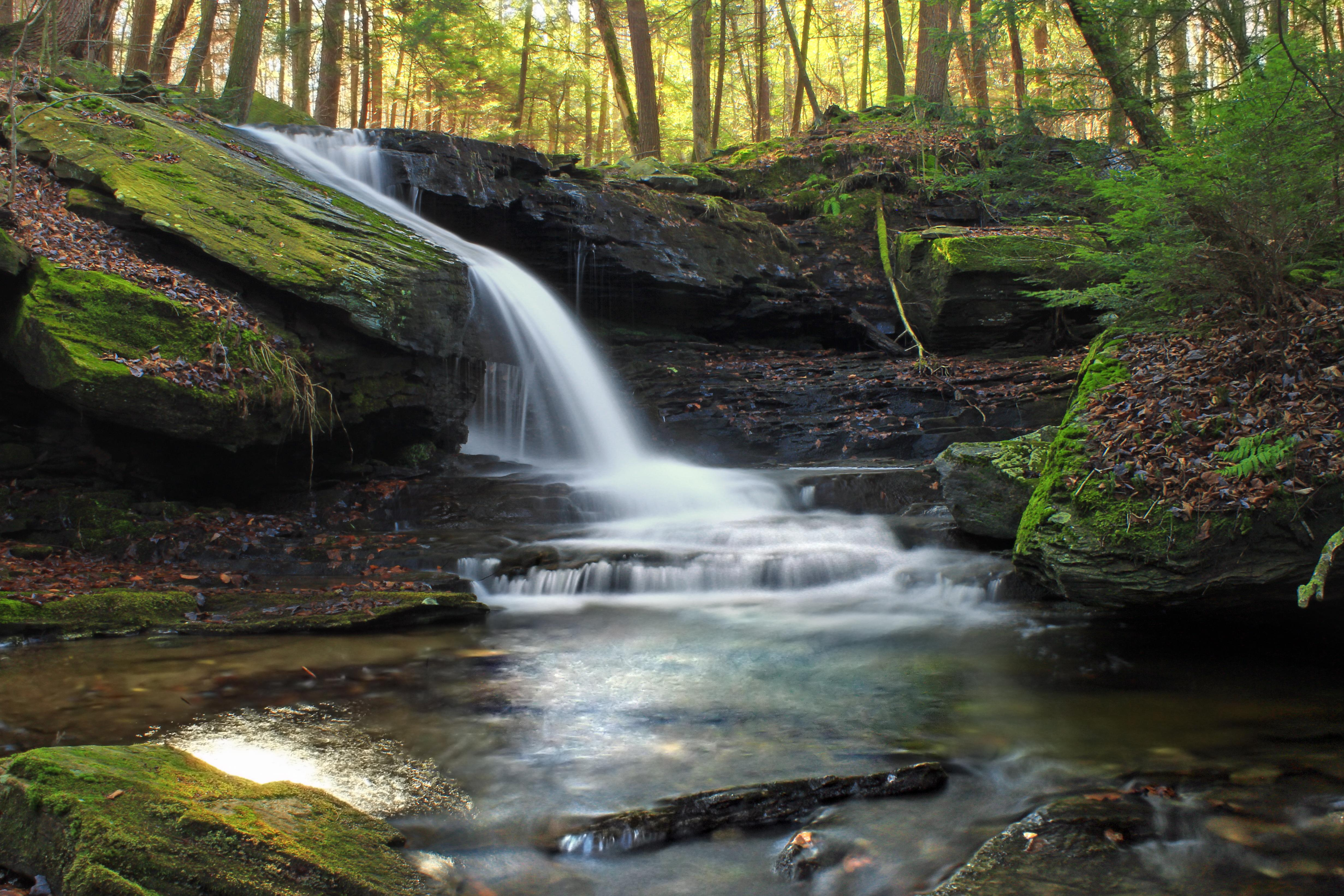 Wood Wallpaper Hd Free Picture Forest Water Waterfall River Stream