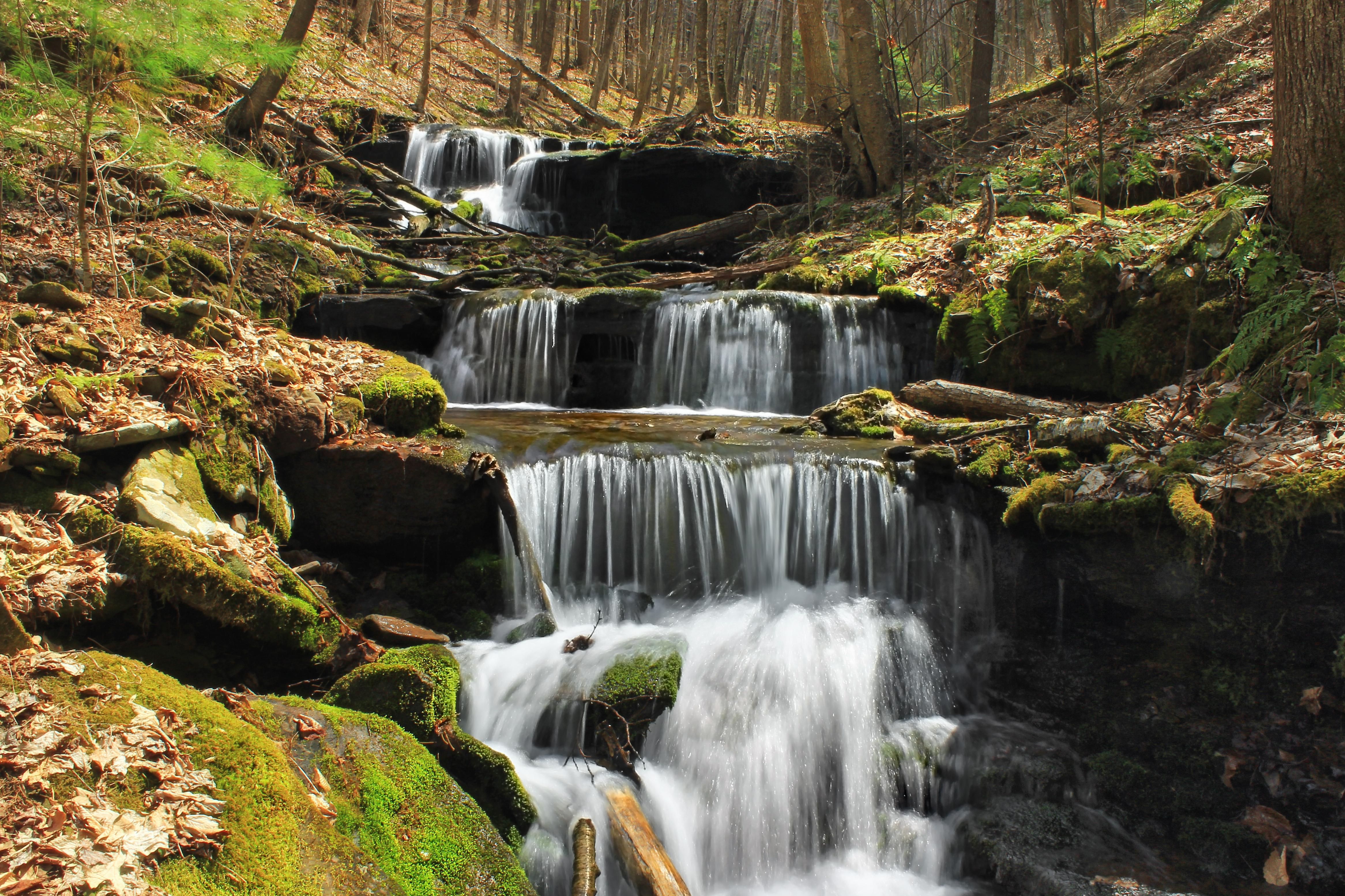 Free picture waterfall water stream forest moss