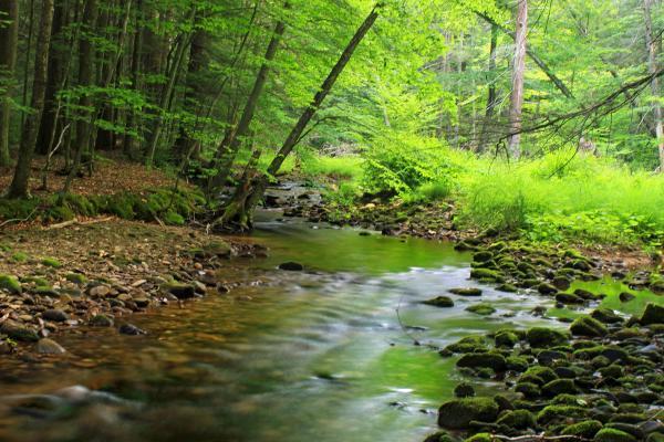 free wood nature water