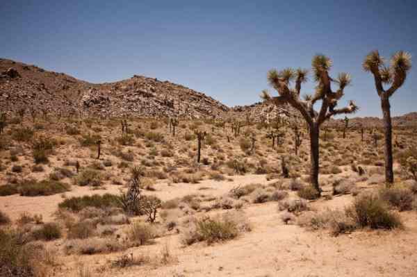 free desert dry landscape