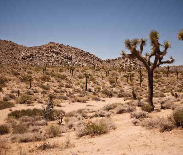 Desert Dry Landscape Geology Sandstone Erosion Cactus Tree Sky Bush Shrub