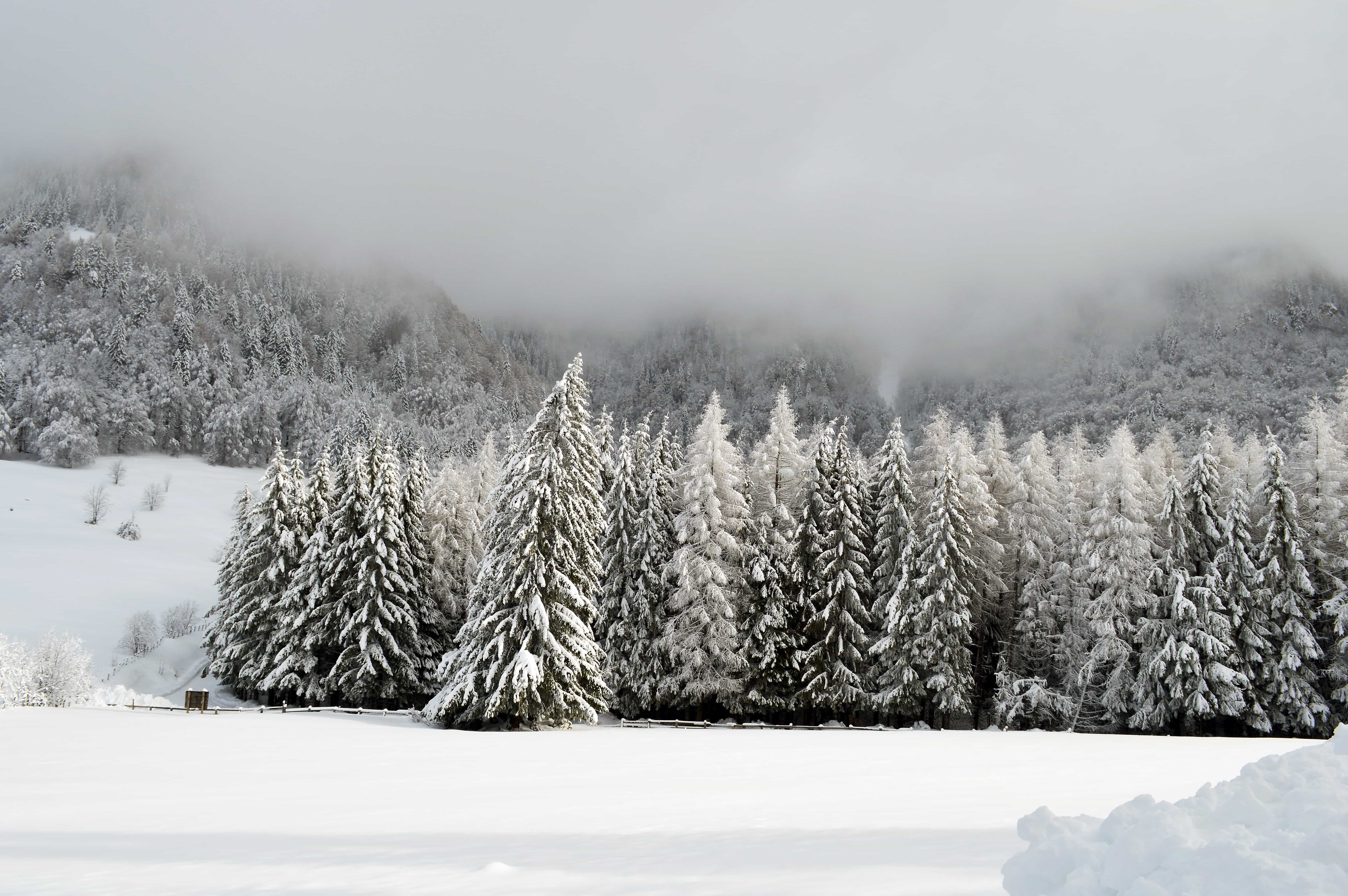 Free picture snow winter frost cold frozen mist