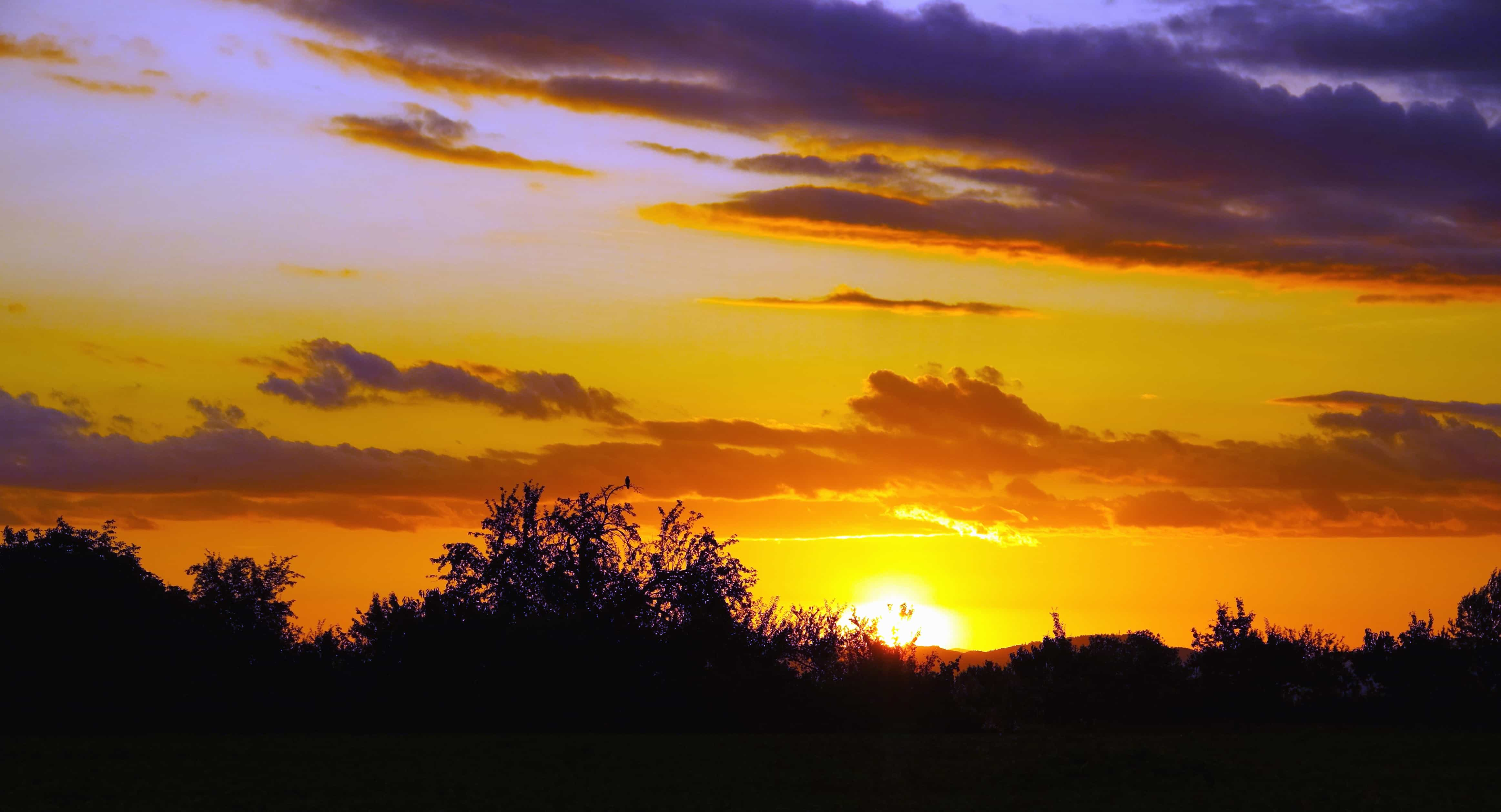 Foto gratis tramonto sole tramonto paesaggio albero