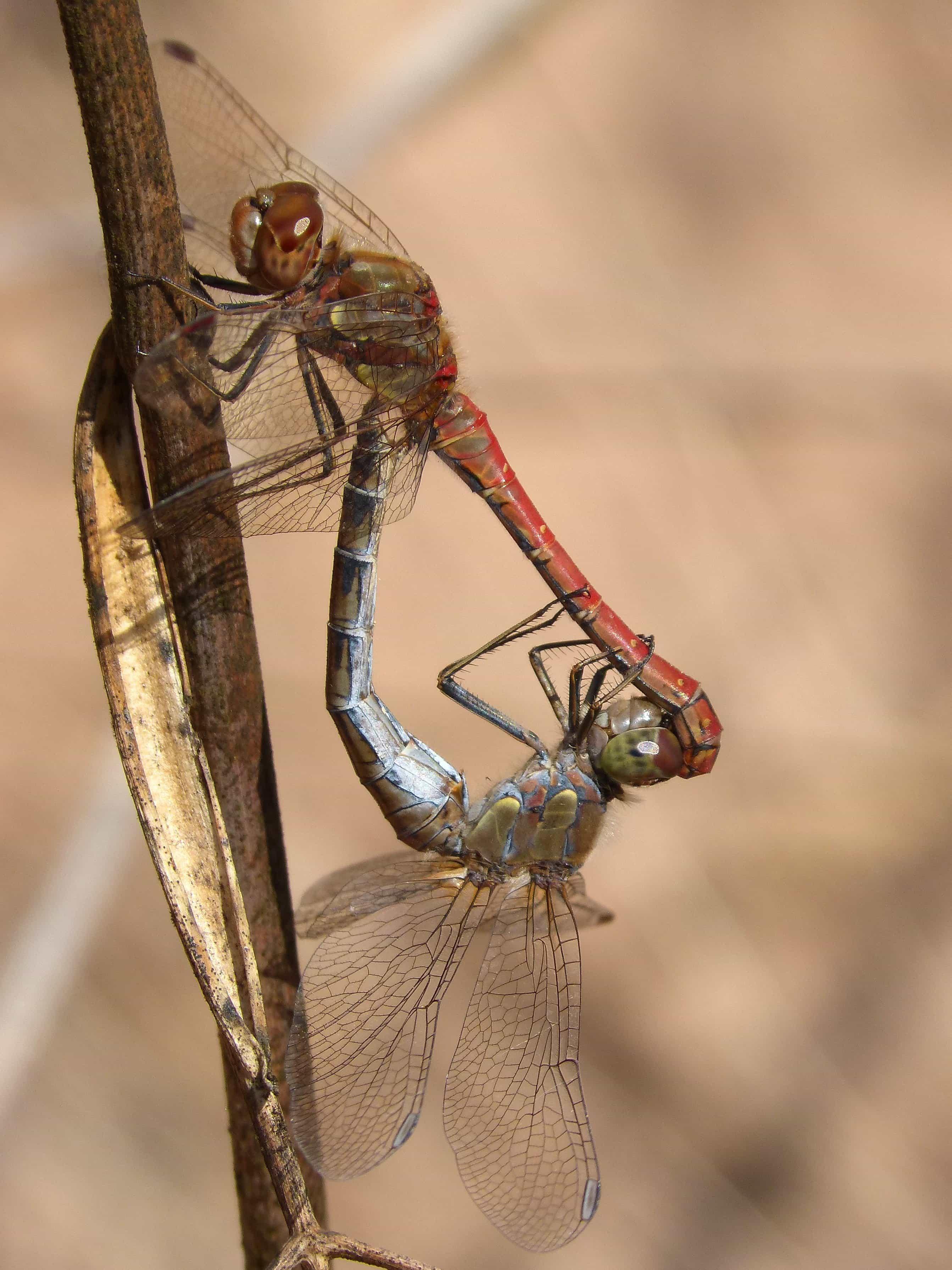 Free Picture Wildlife Macro Invertebrate Nature