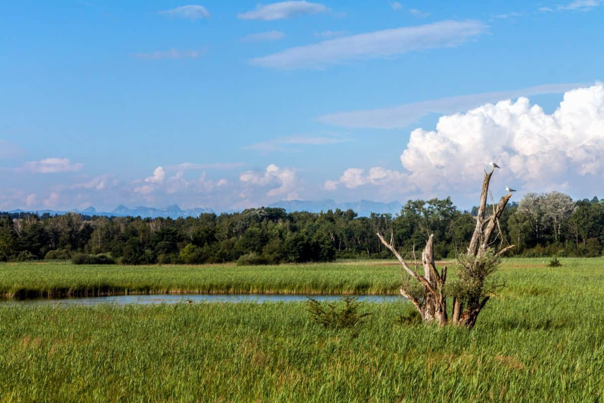 Free Picture Swamp Landscape Nature Blue Sky Tree Grass