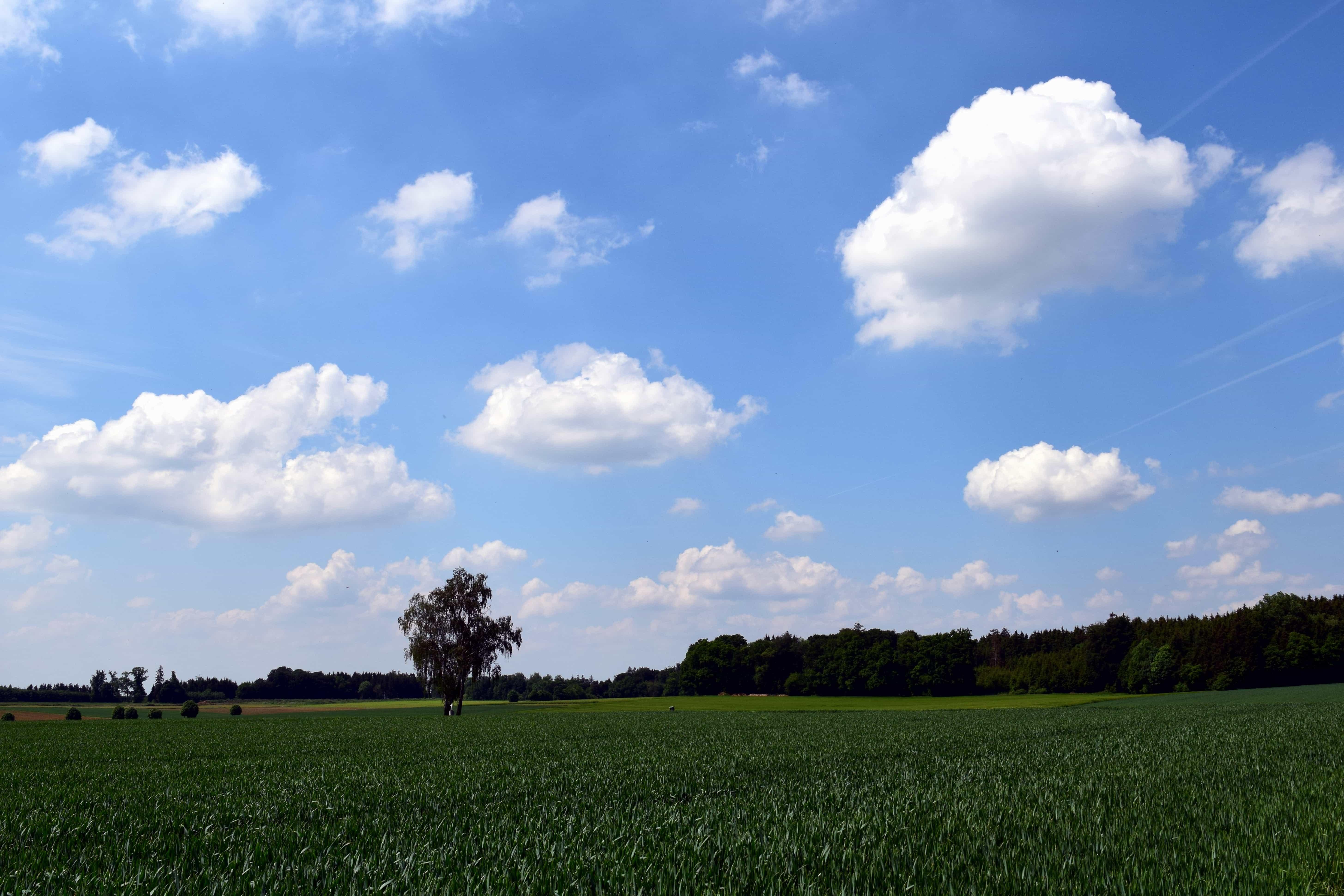 Free picture farm landscape blue sky tree nature