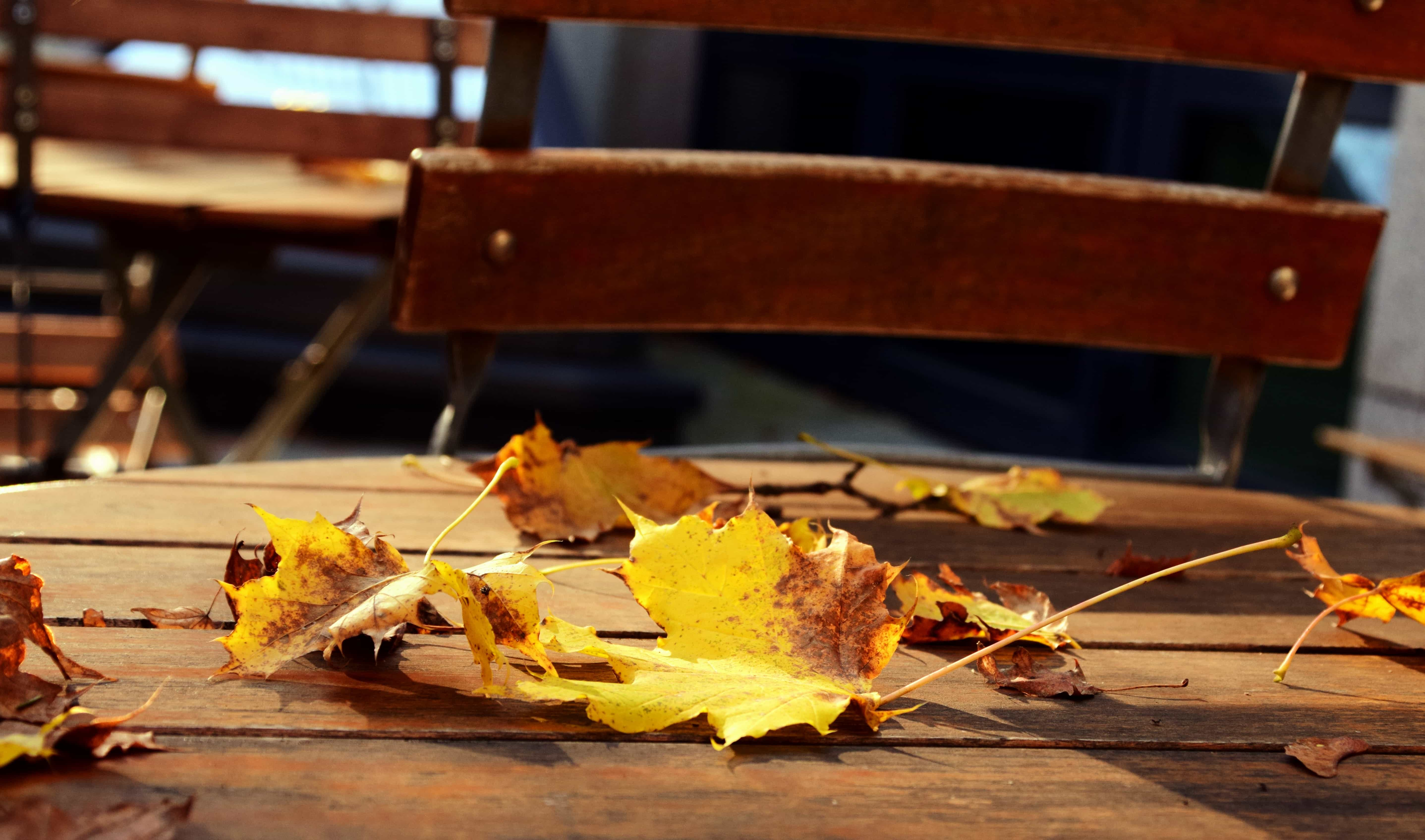 Free picture wood table autumn chair park outdoor
