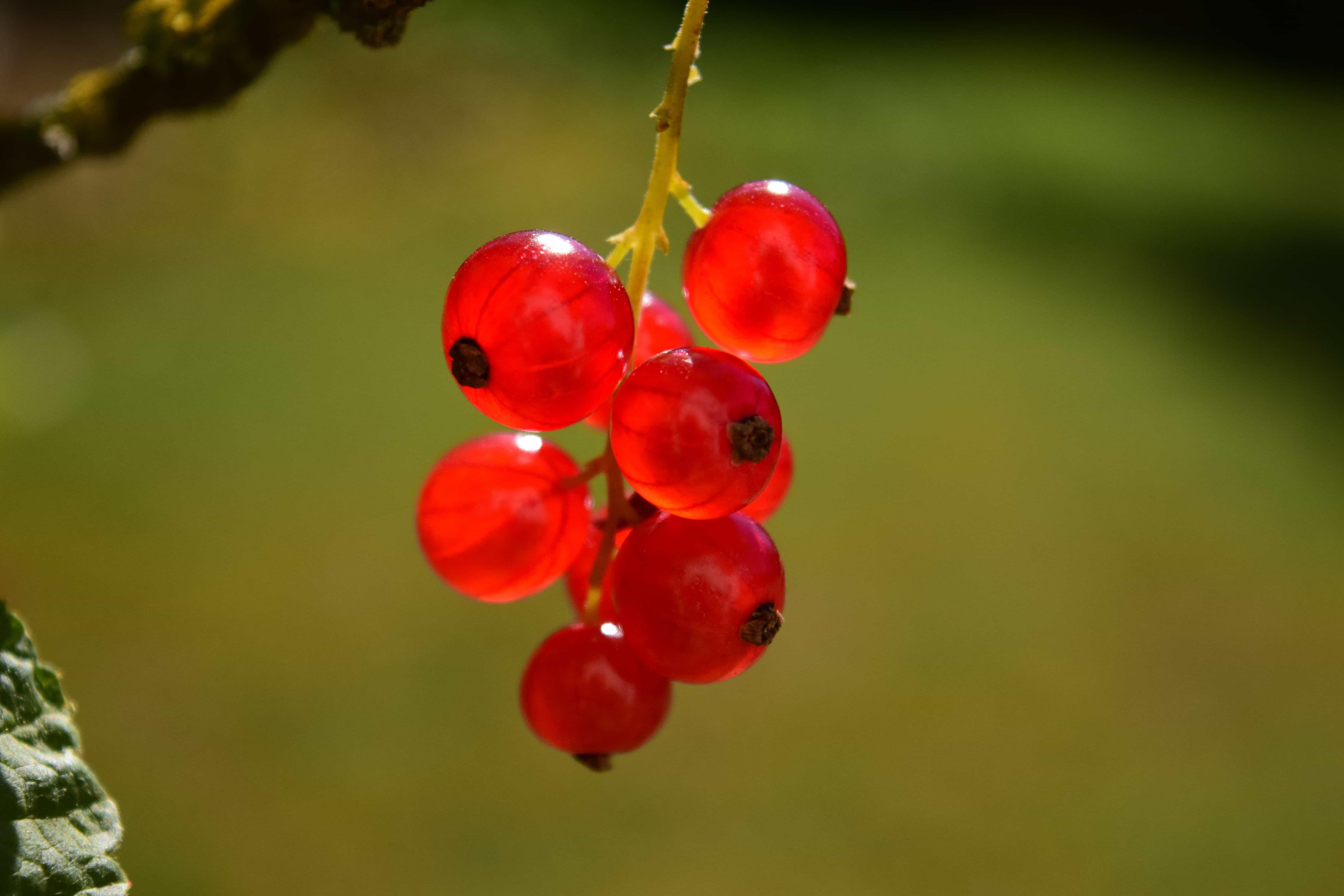 3d 2018 Wallpaper Image Libre Fruits Nature Feuilles Berry 233 T 233