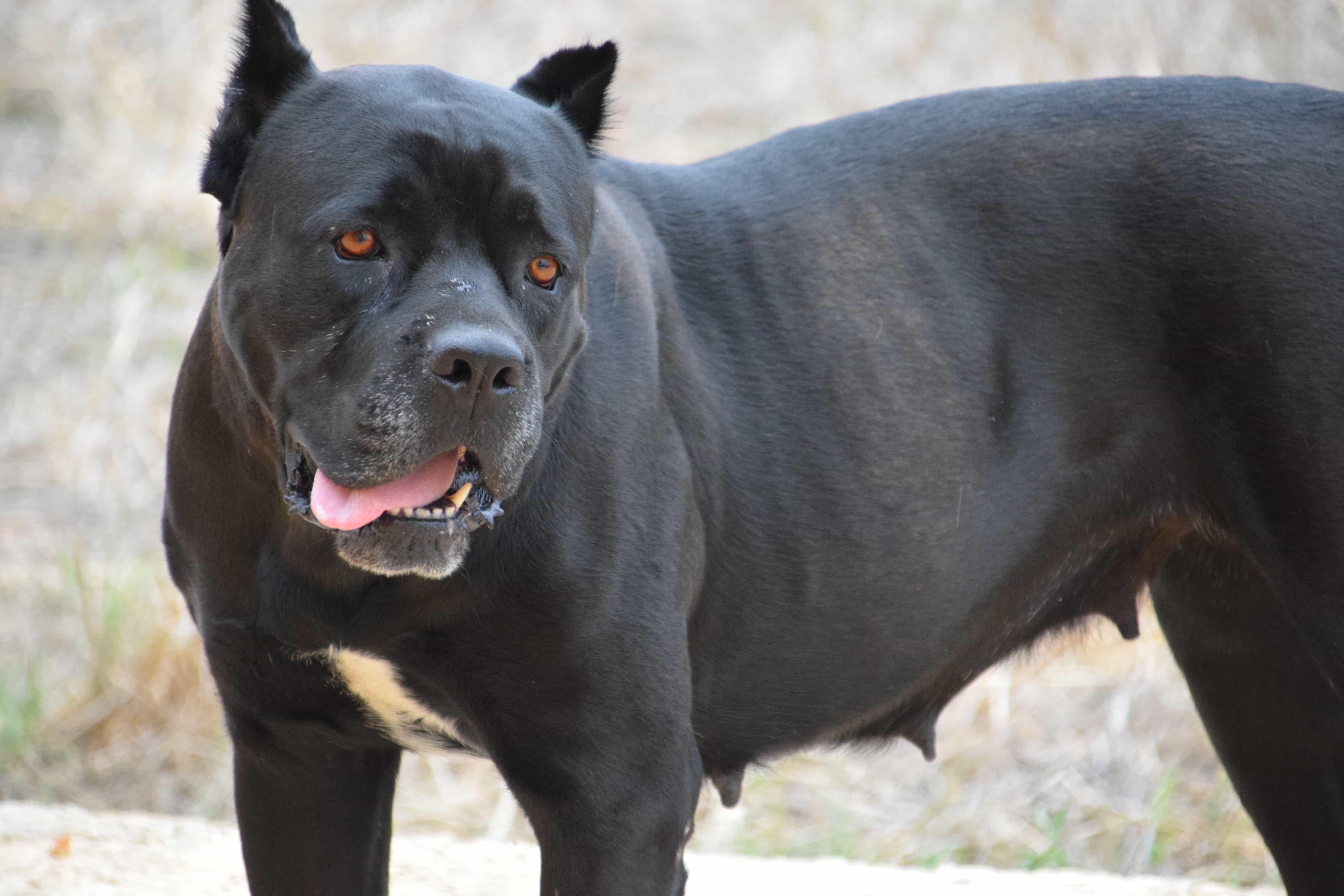 Kostenlose Bild schwarzer Hund Tier Boden outdoor Fell im freien