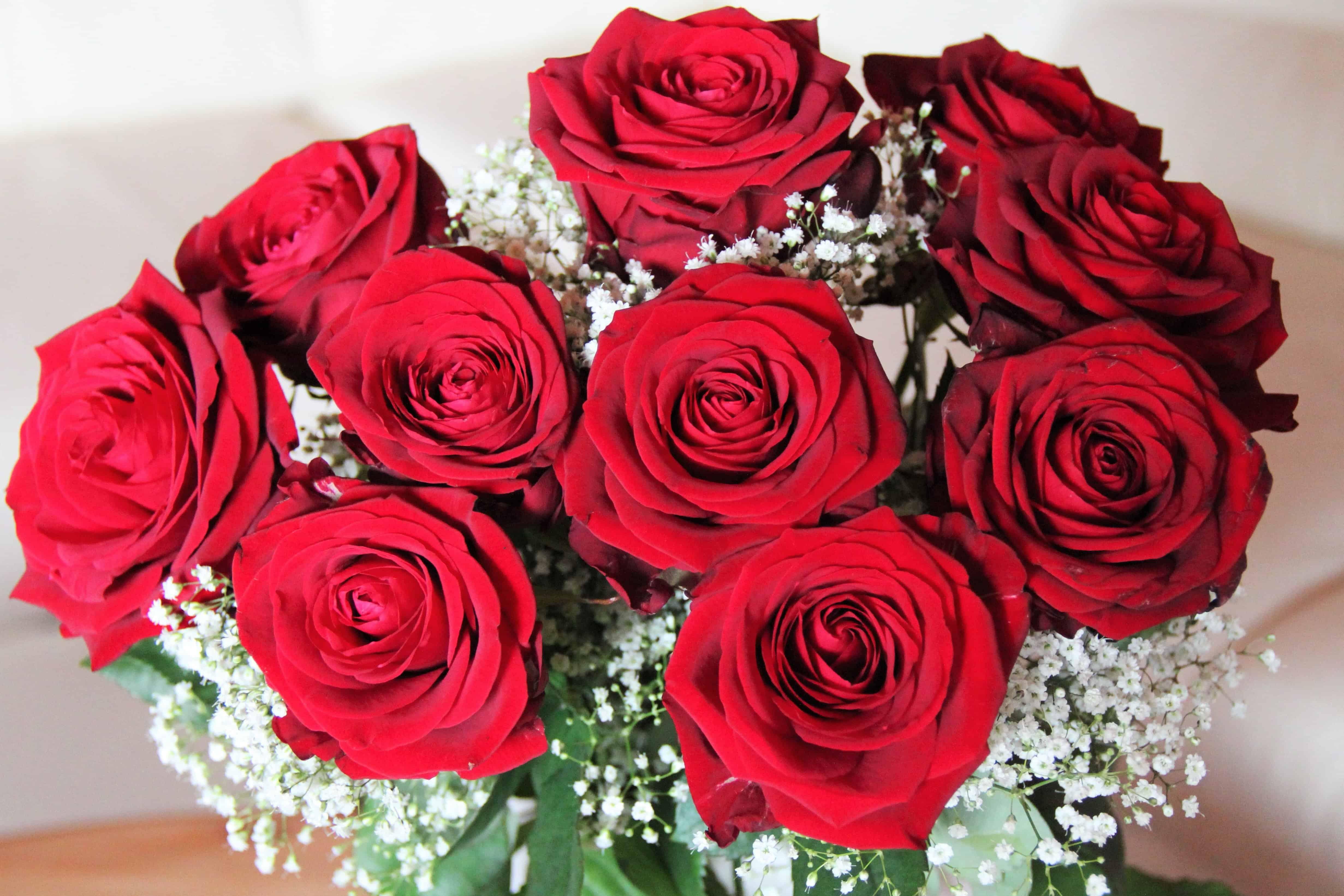 Kostenlose Bild Rose Blumenstrau Bltenblatt Blume