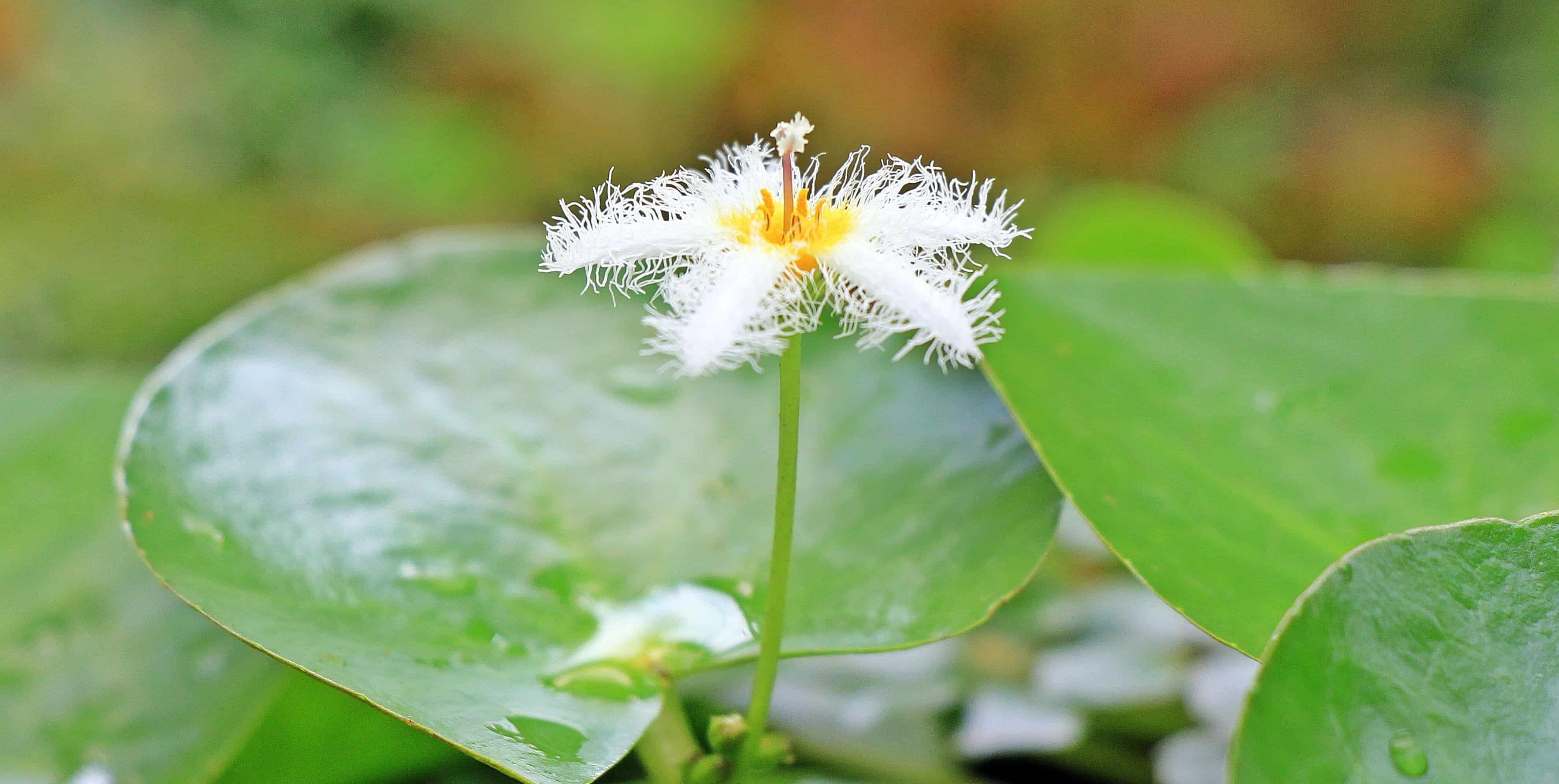 Image libre flore nature feuilles plante fleur blanche horticulture fleur jardin