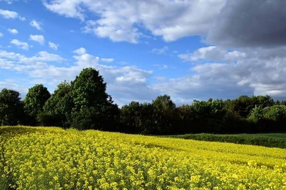 Foto gratis paesaggio agricoltura natura agricoltura