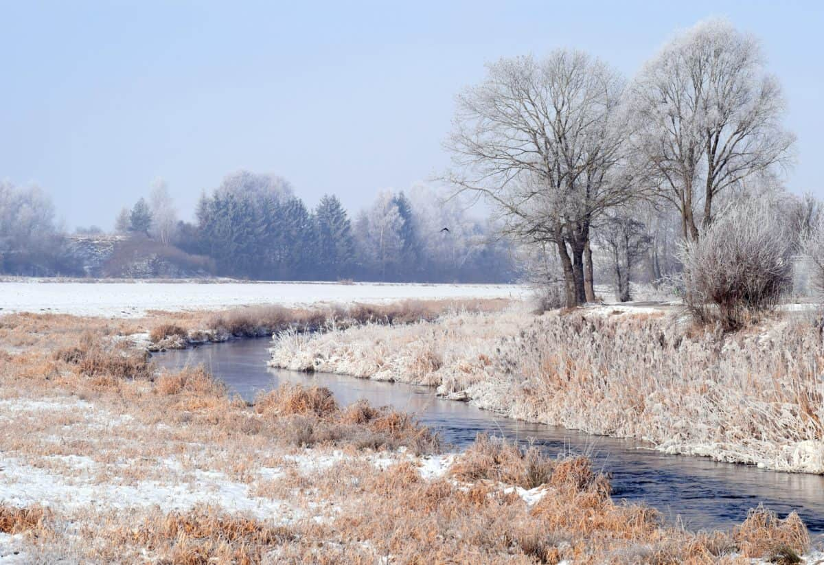 Free picture landscape cold frost winter tree nature