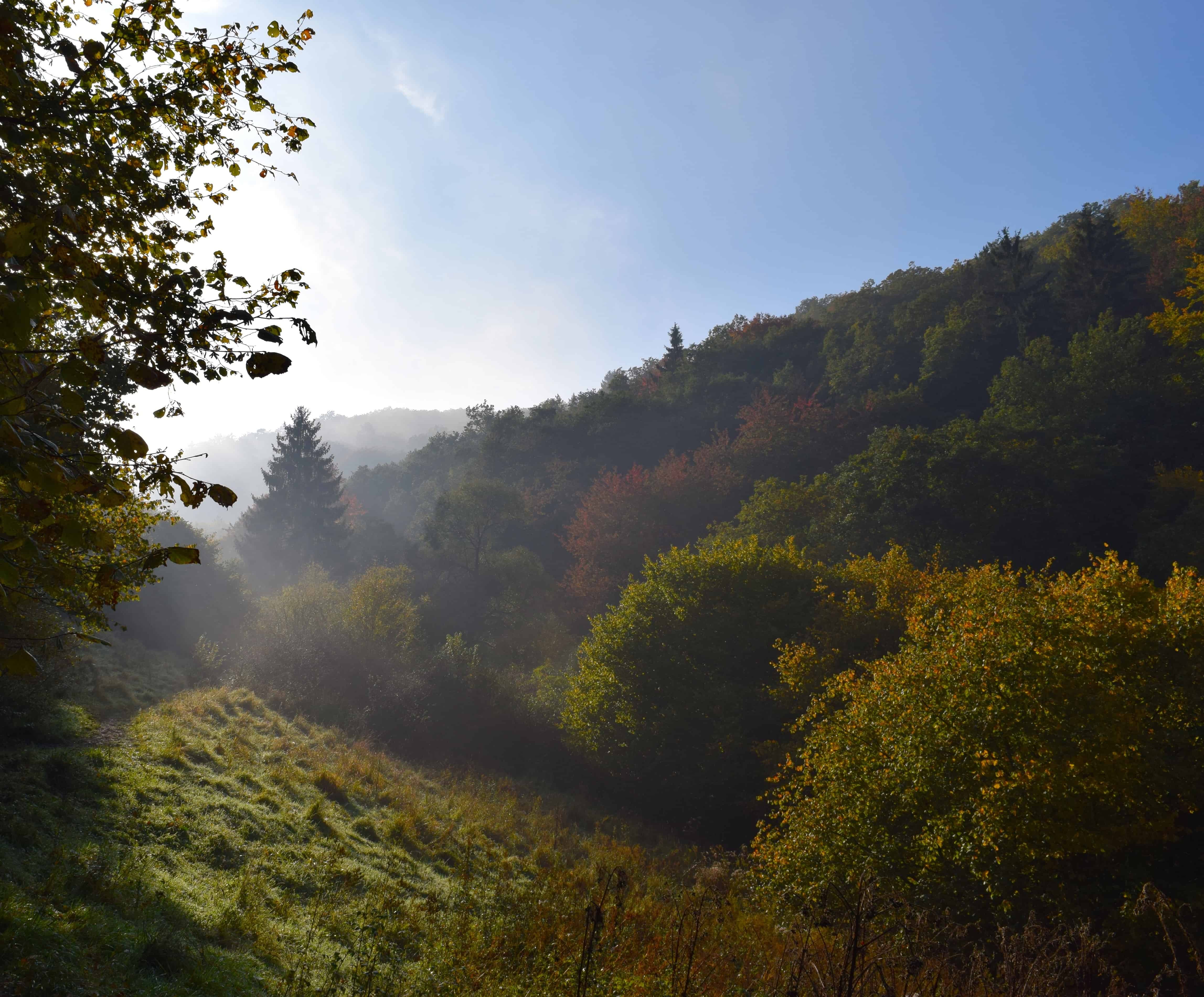Free picture fog mountain nature landscape dawn mist wood tree