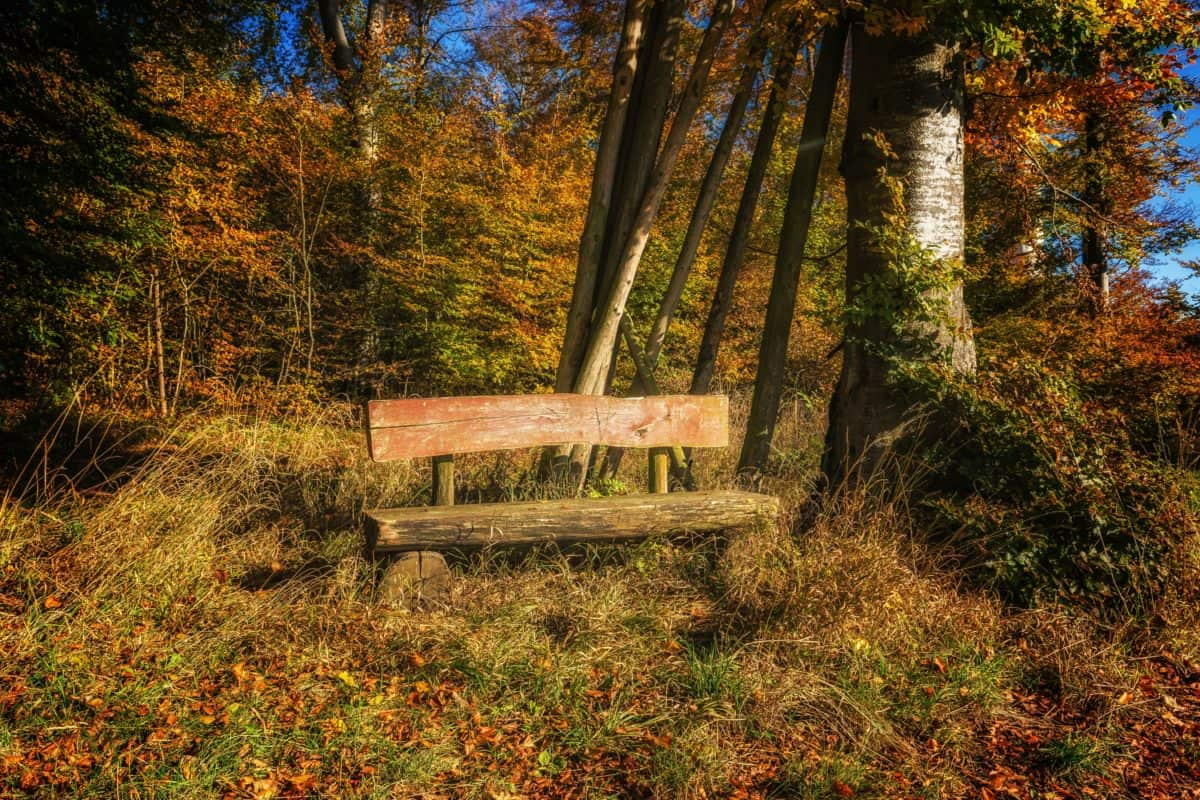 Free picture landscape bench leaf wood nature tree