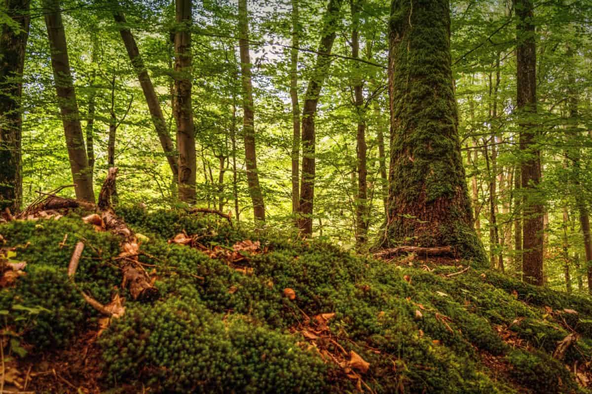 Color Full Hd Wallpaper Free Picture Moss Hill Wood Tree Leaf Environment