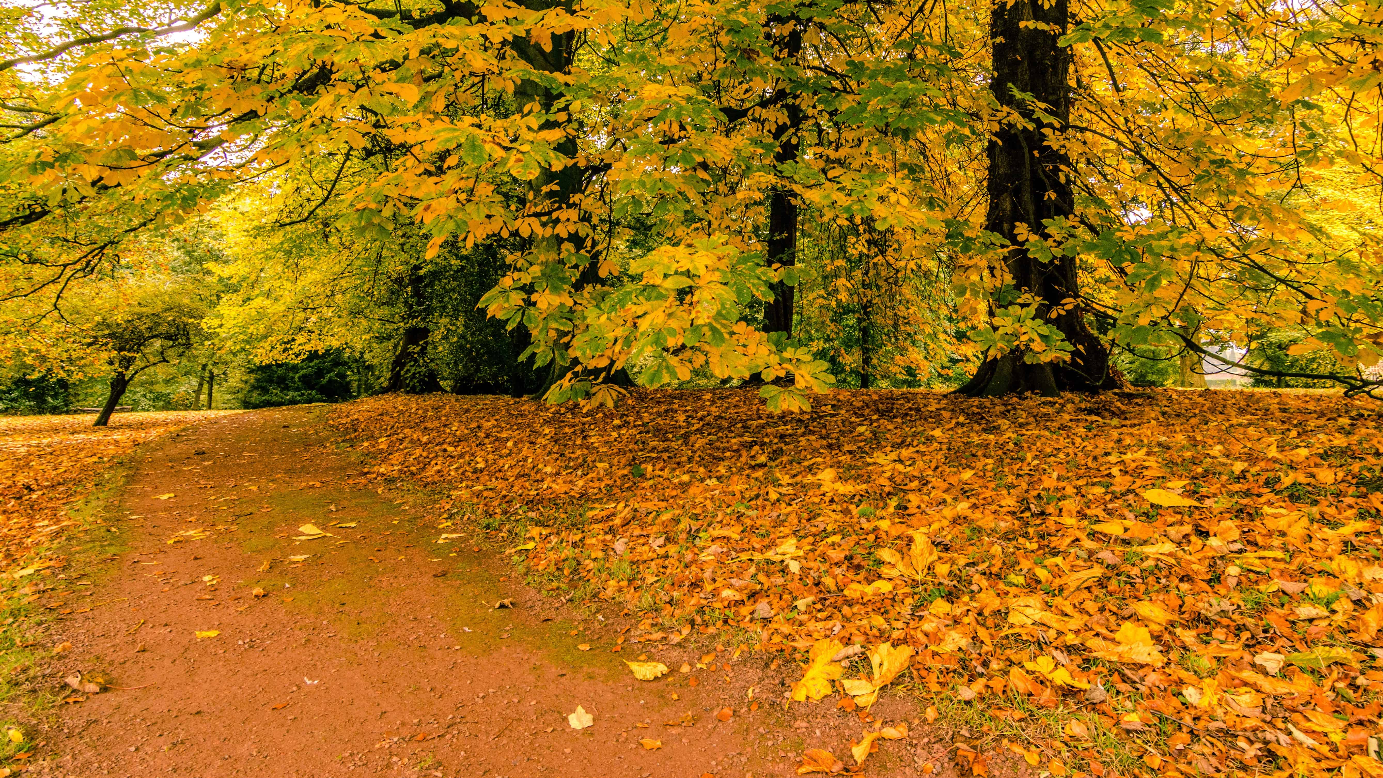 Free picture wood landscape leaf nature tree autumn