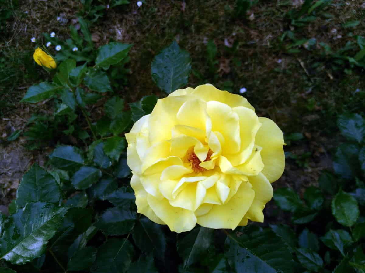 Free picture nature leaf petal flora yellow flower