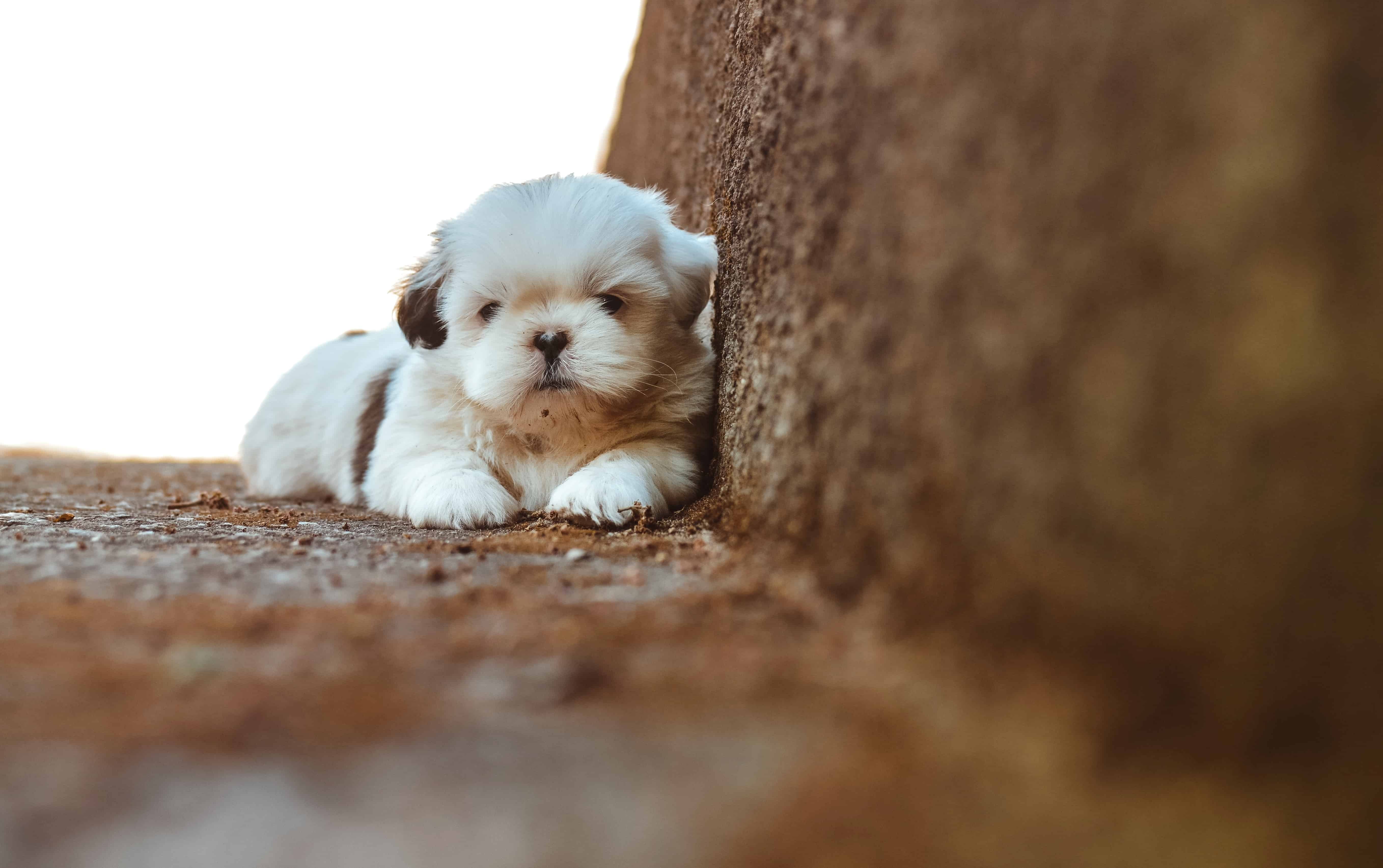 Download Wallpaper Cute Cat Free Picture Cute Dog Canine Pet Puppy Adorable Fur