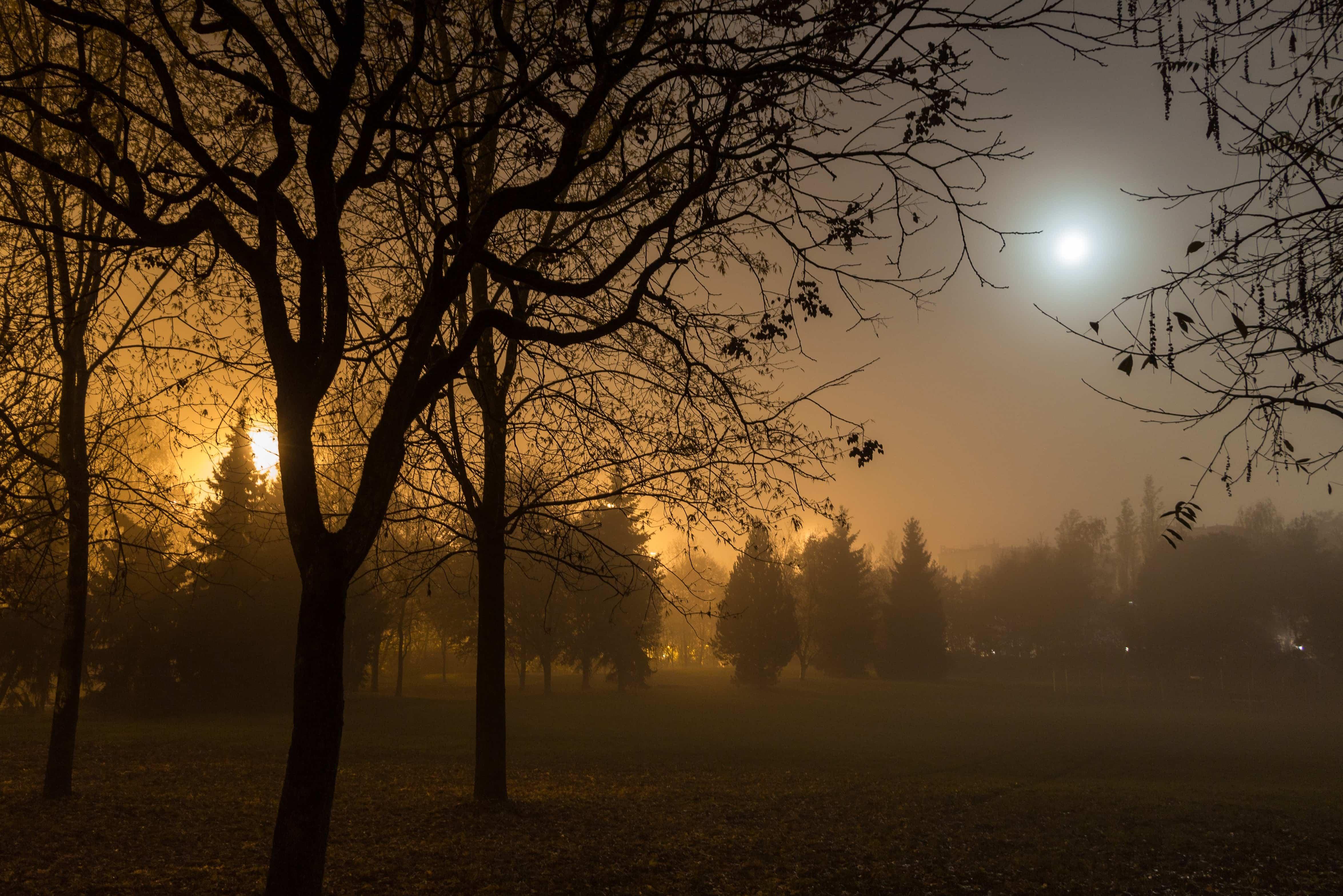 Fall Landscape Free Wallpaper Free Picture Silhouette Tree Dawn Sun Landscape Fog