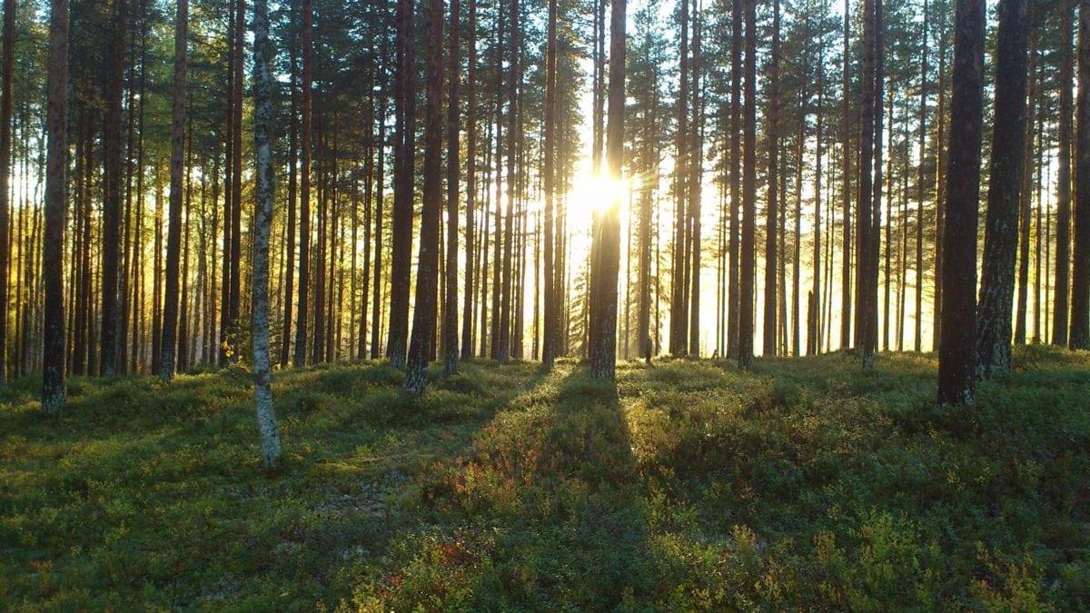 Gambar gratis kabut pemandangan fajar pohon daun