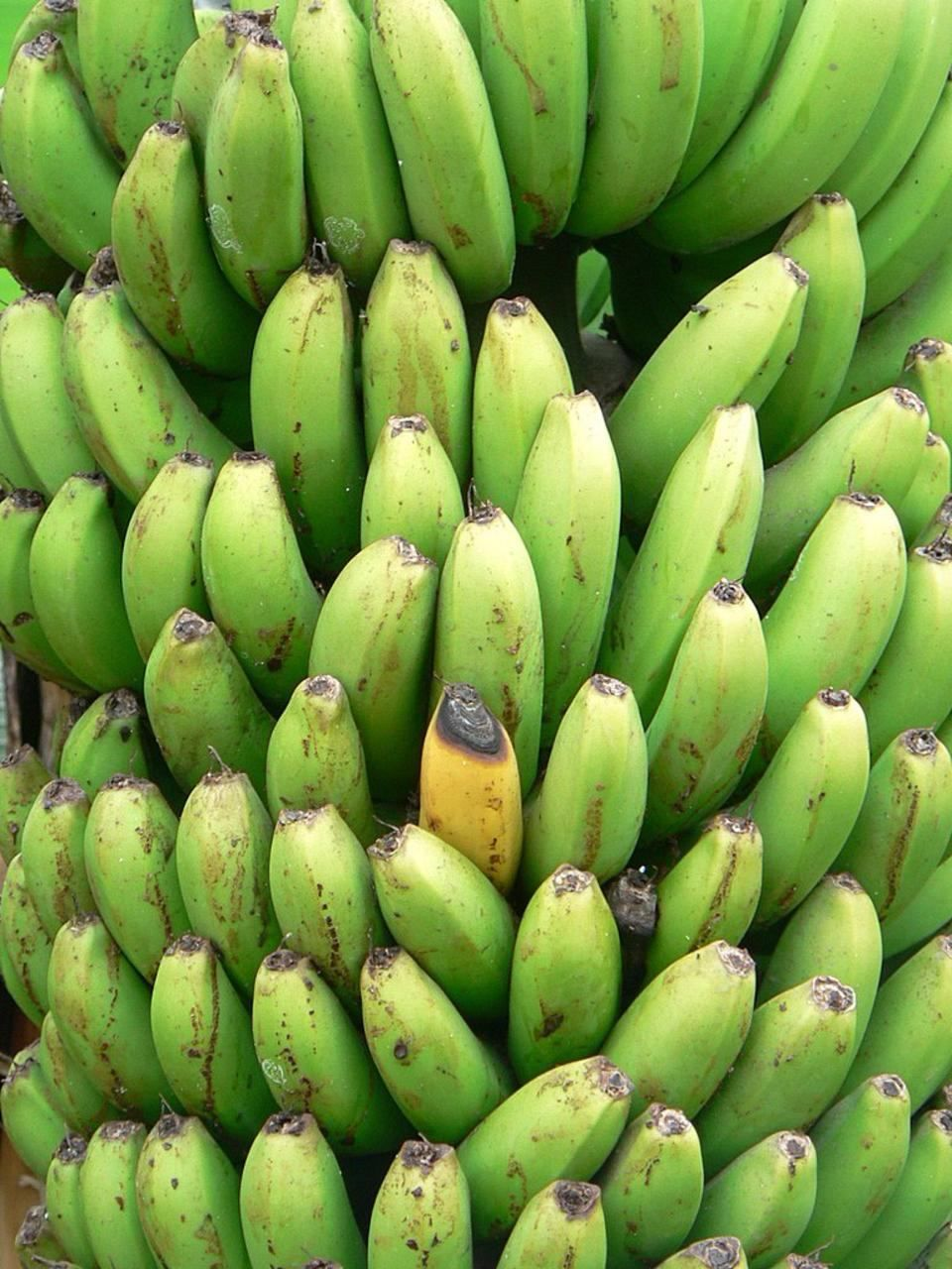 Free Picture Green Yellow Bananas