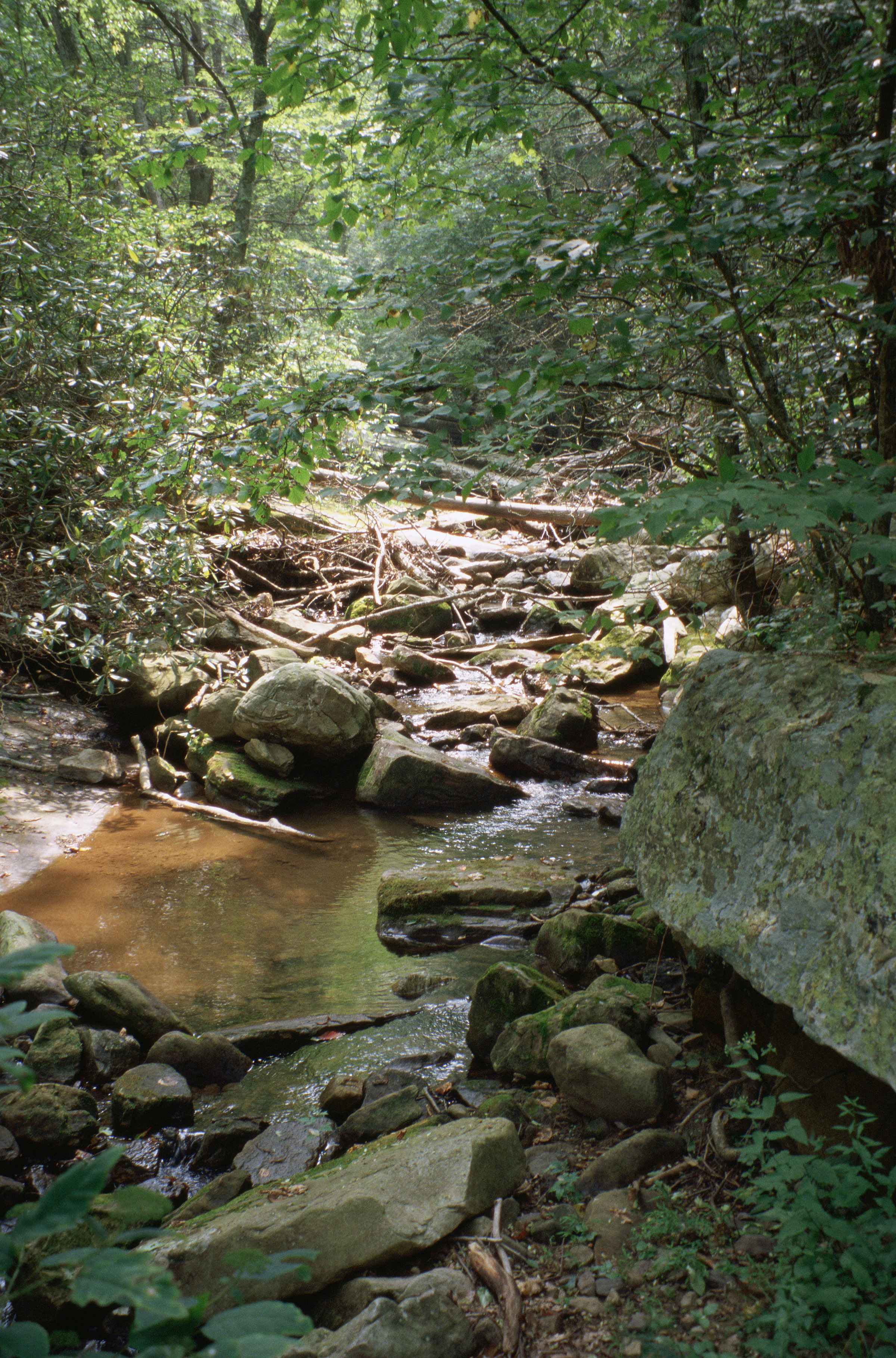 Free picture shallow rocky mountain stream