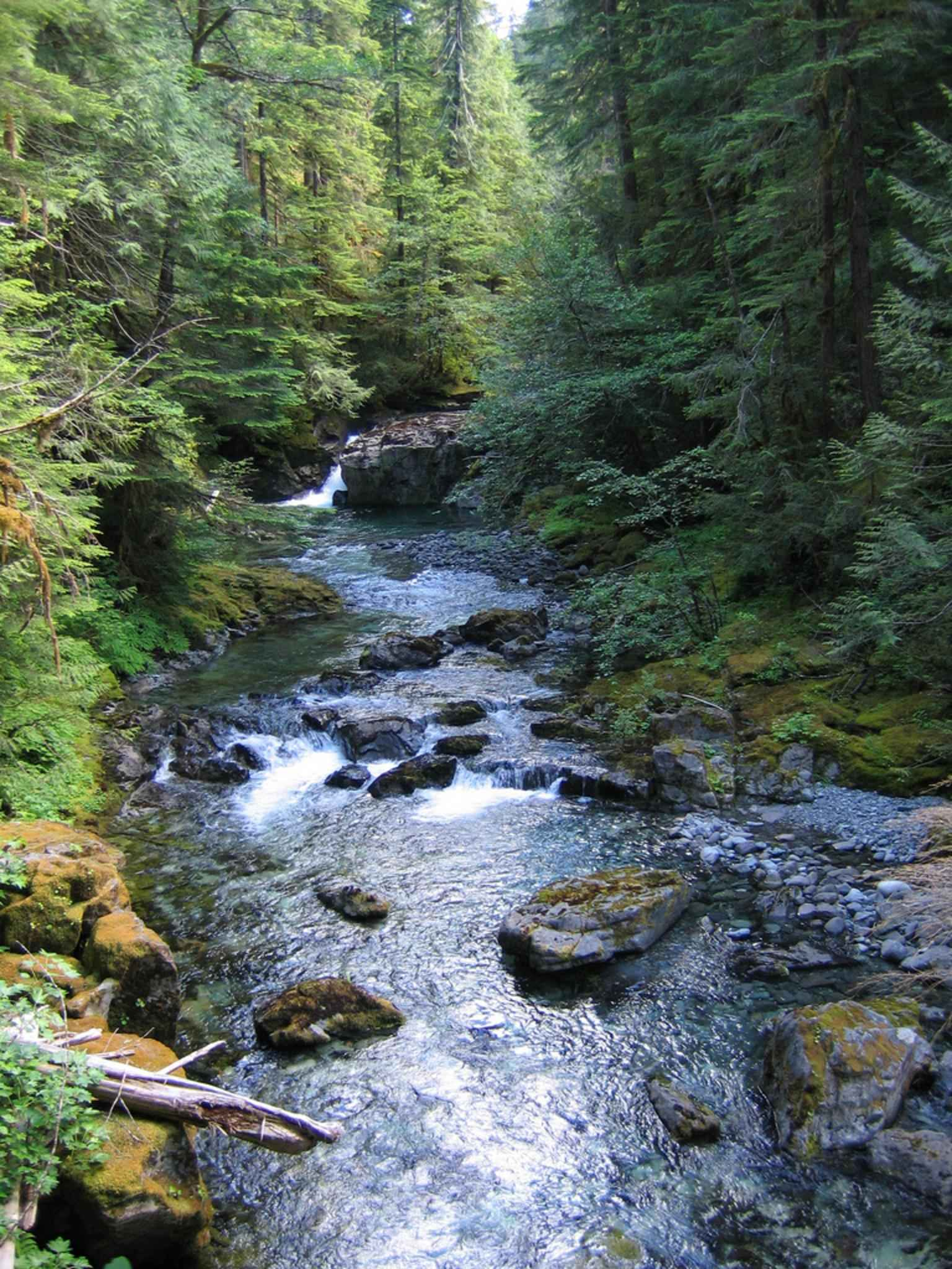 Free picture willamette national forest creek