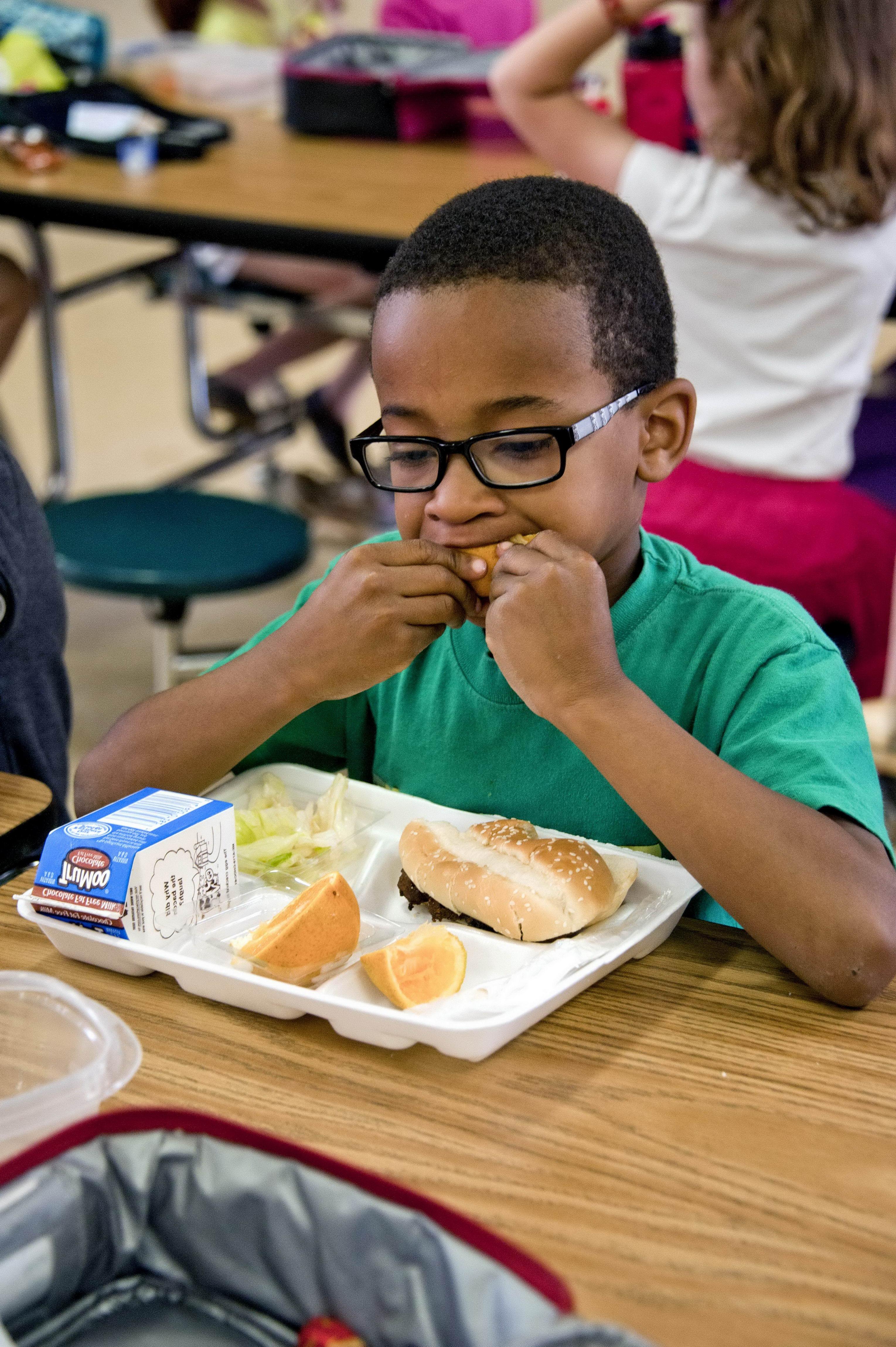 Free Picture Boy Eating Food Sandwich Fresh Salad Milk