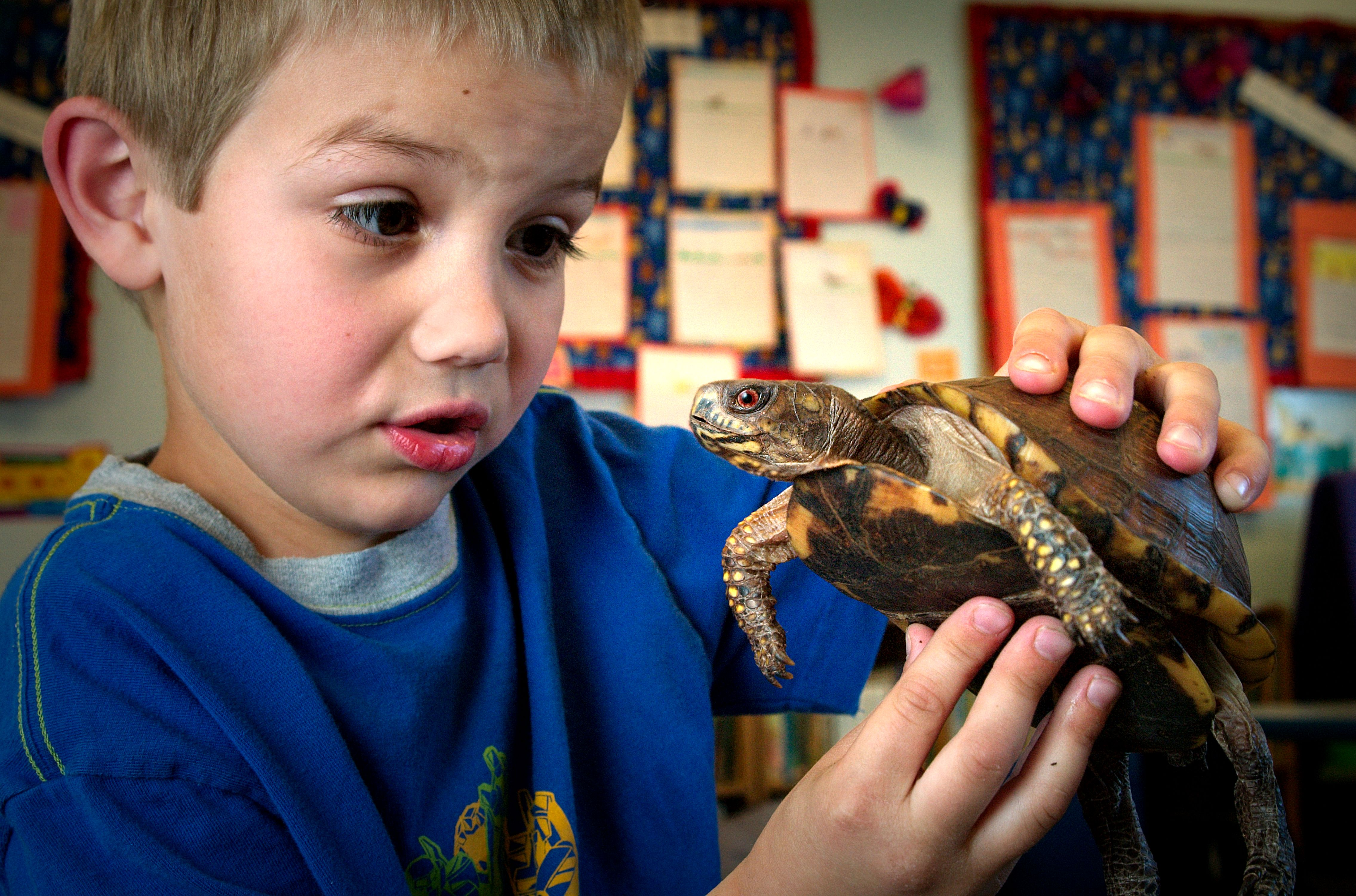 Free Picture Young Boy Holding Box Turtle Portraying
